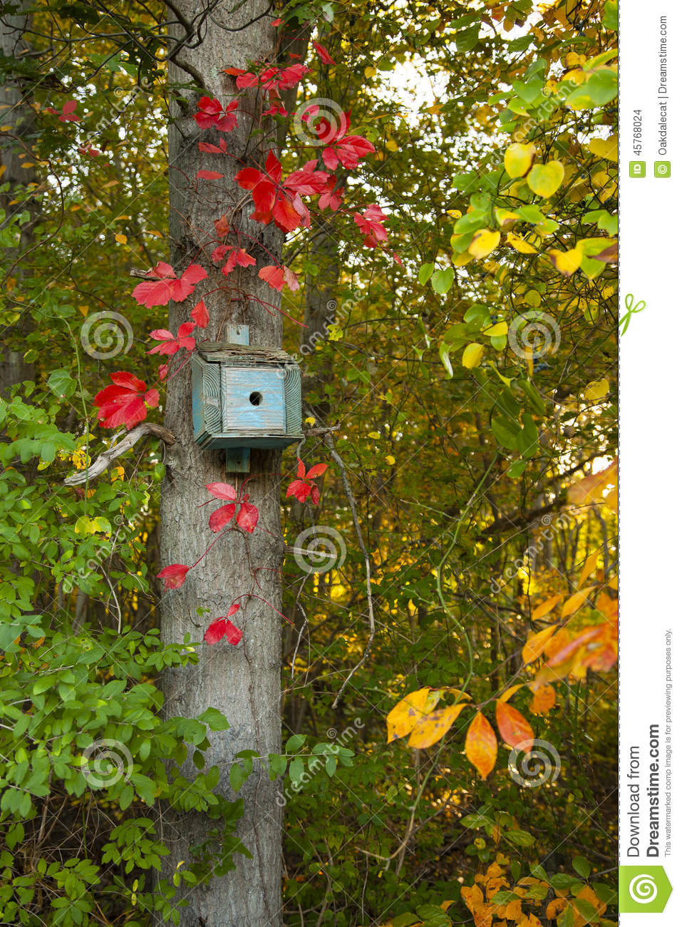 Blue Bird House Surrounded By Leaves In Fall Colors Stock