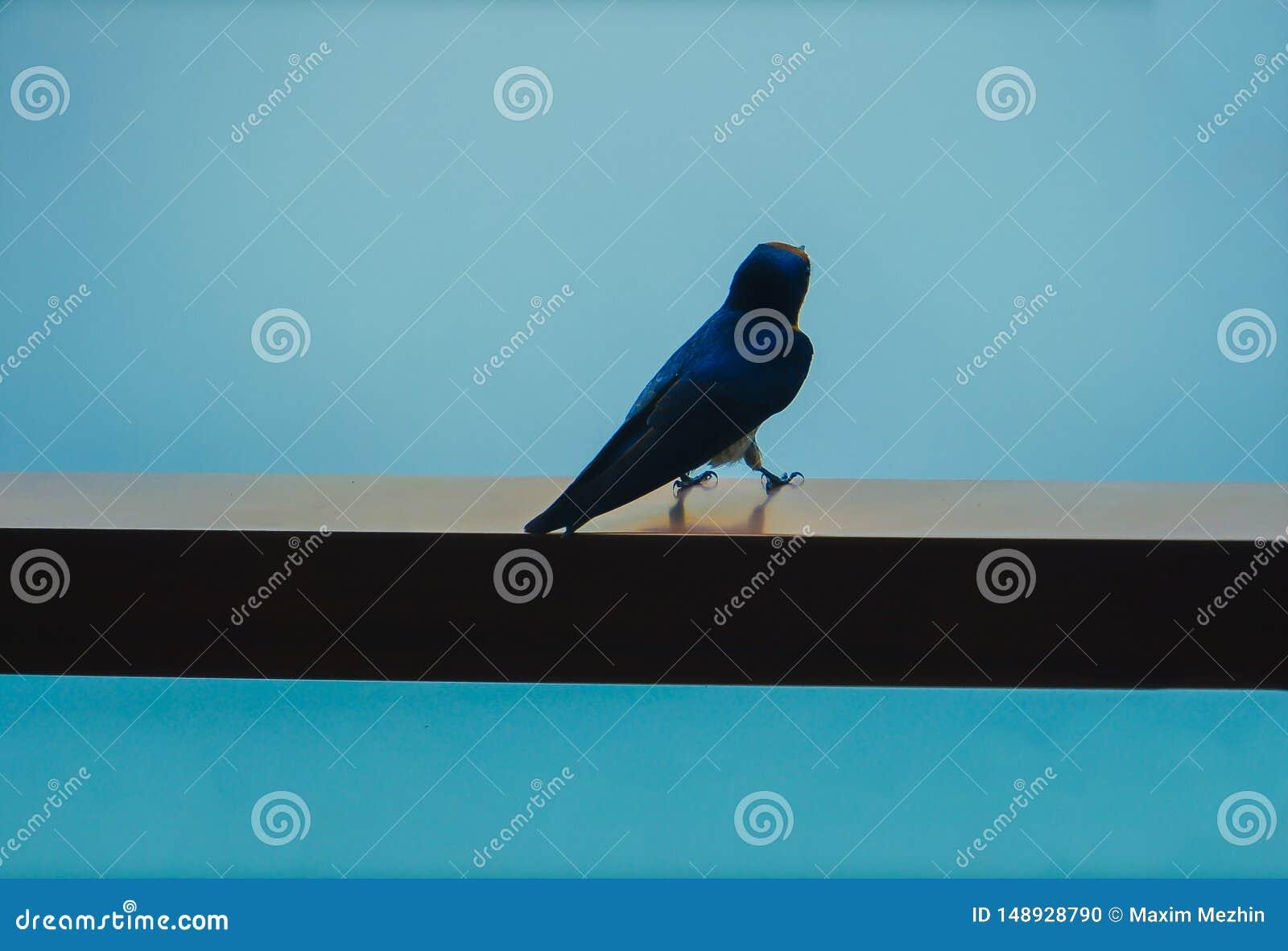 Blue bird sitting on the balcony