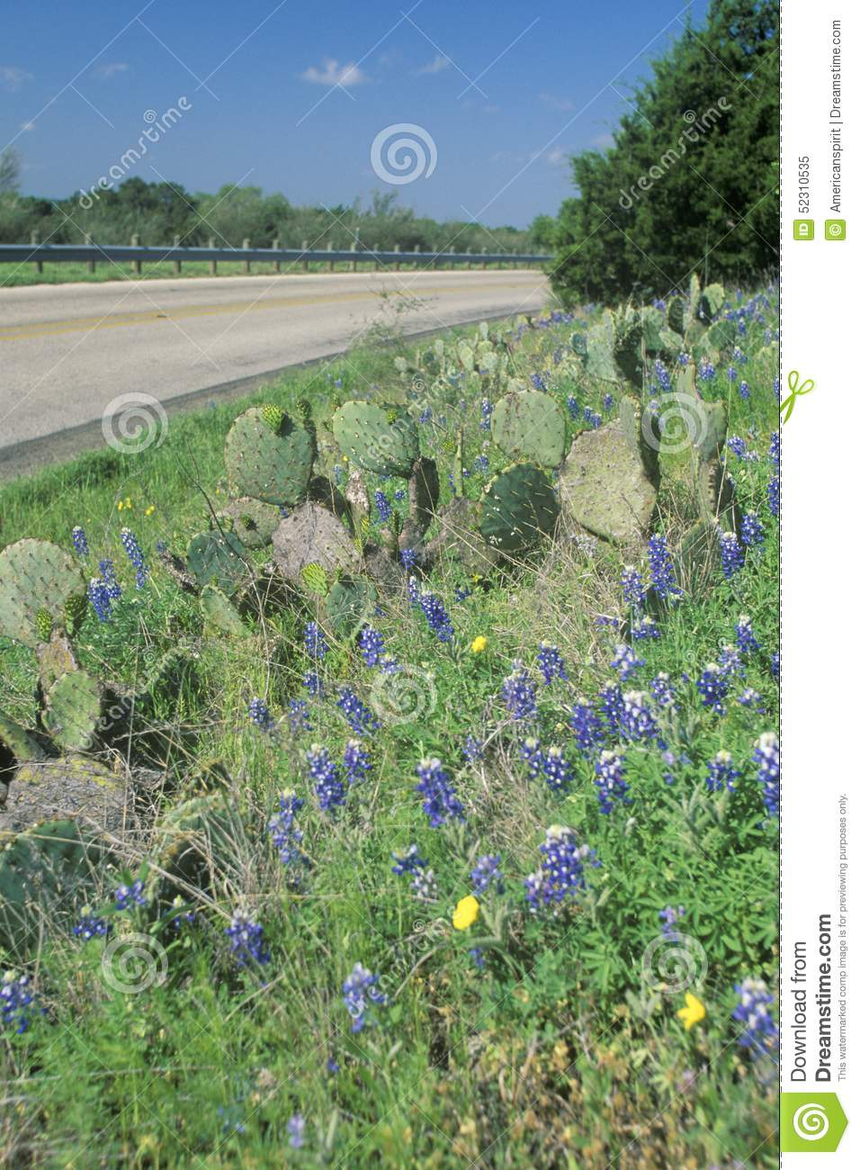 Blue Bonnets And Wild Spring Flowers Along A Road In Texas Stock