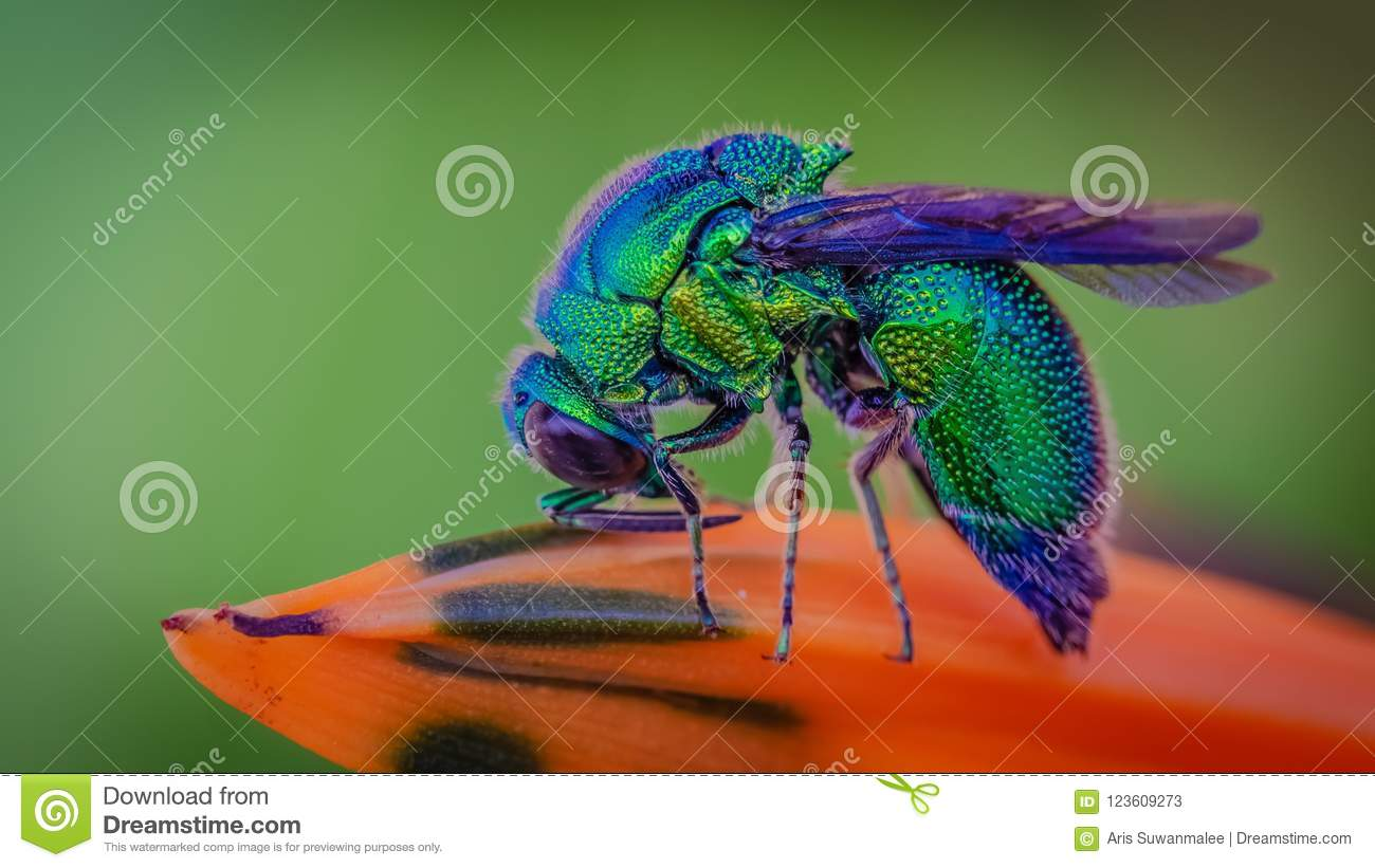Blue Bottle Fly Insect Animal