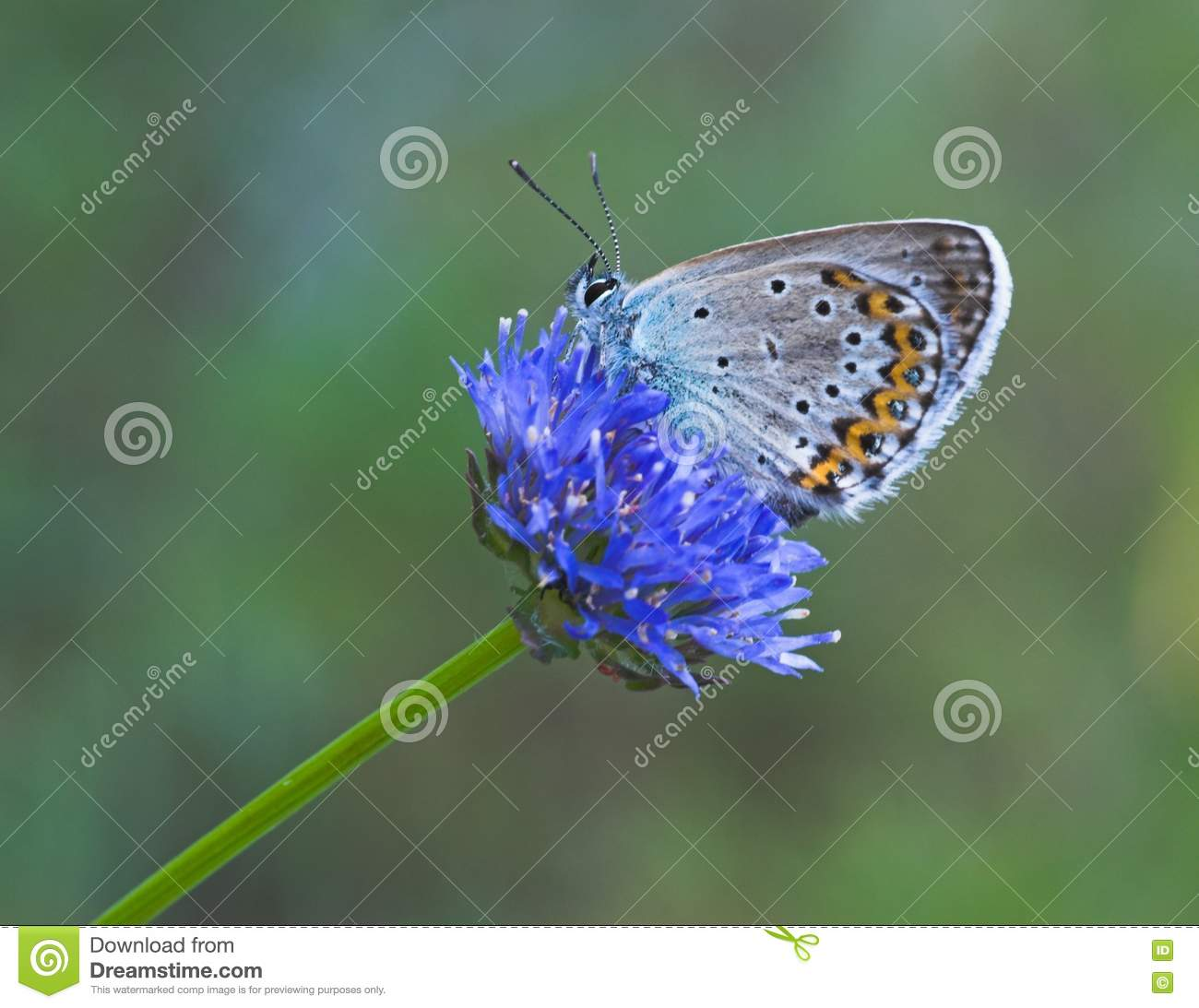 Blue Butterfly On Blue Flower Picture. Image  888867 9f50437b8f9