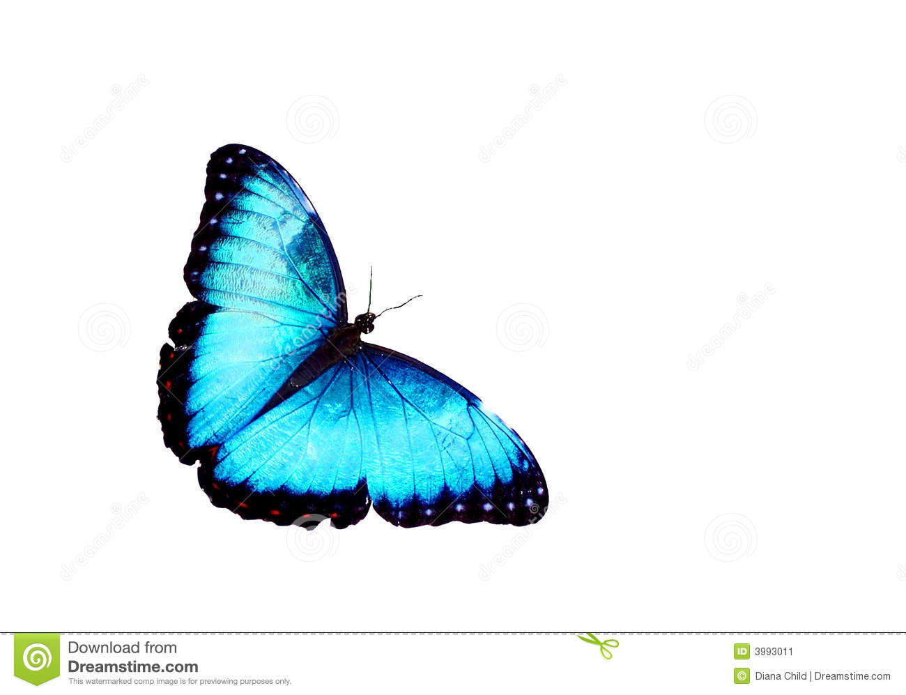 Blue Butterfly Isolated Stock Image - Image: 3993011