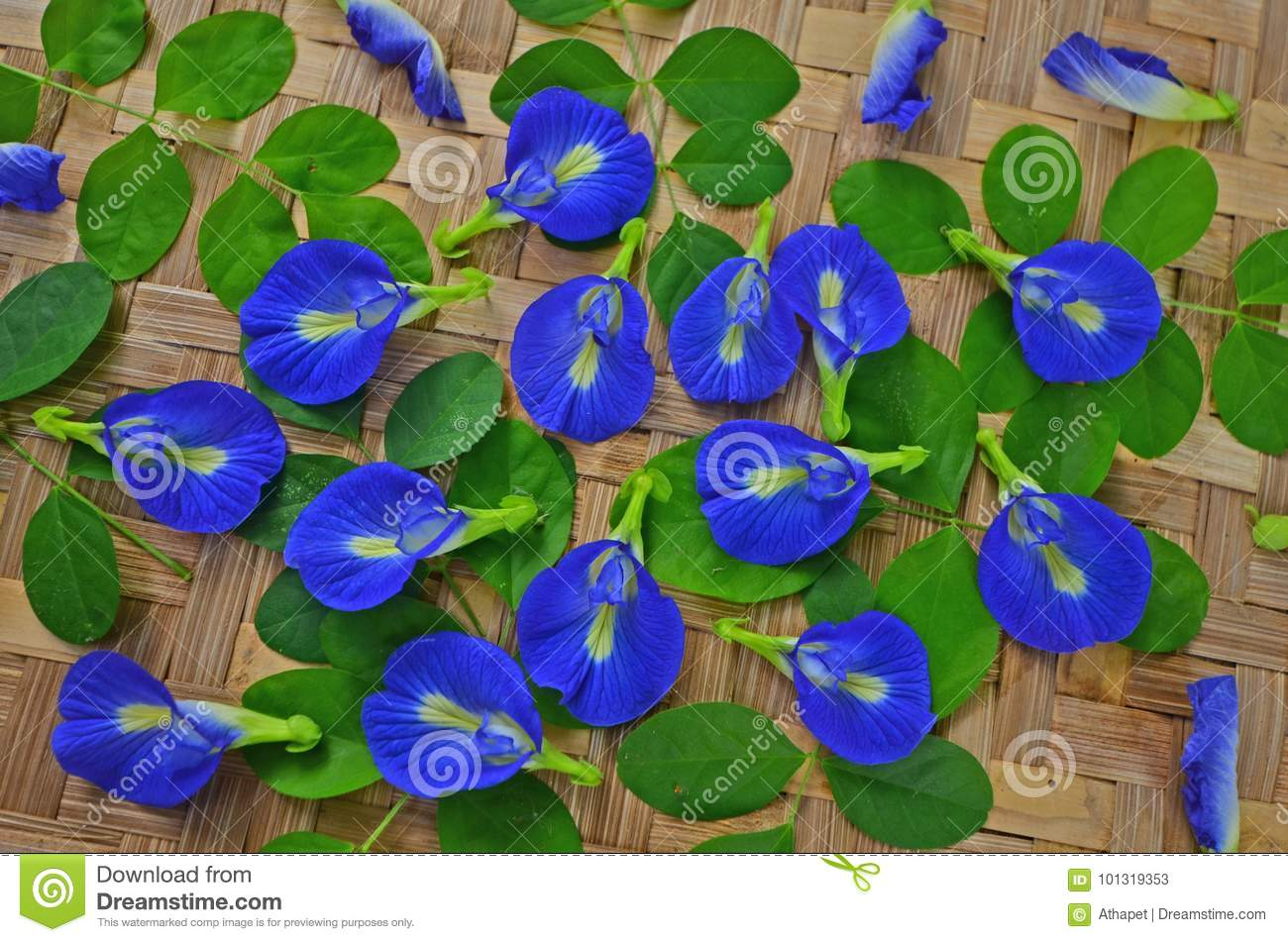 Blue Butterfly Vine Flowers With Green Leaves Stock Image Image Of