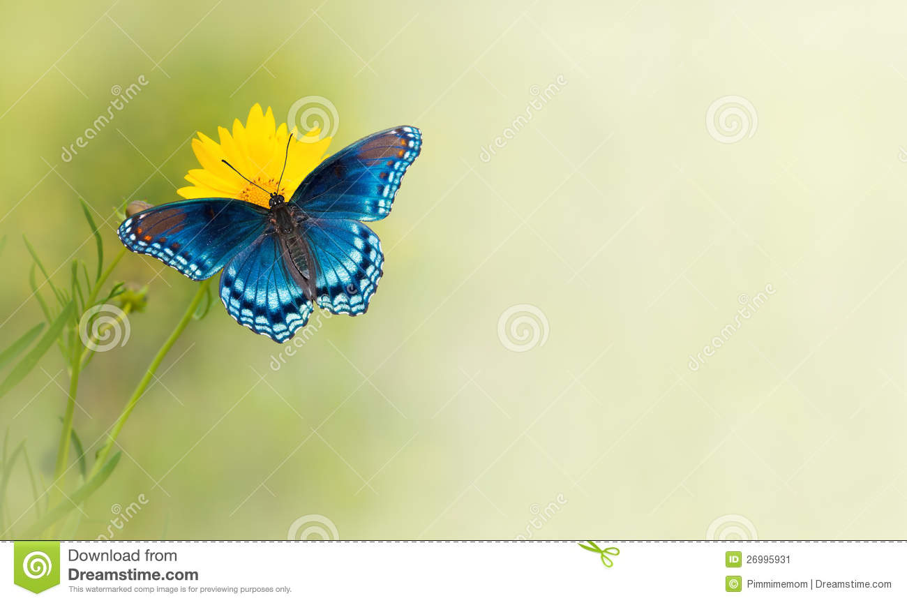 blue butterfly on yellow flower stock image image 26995931
