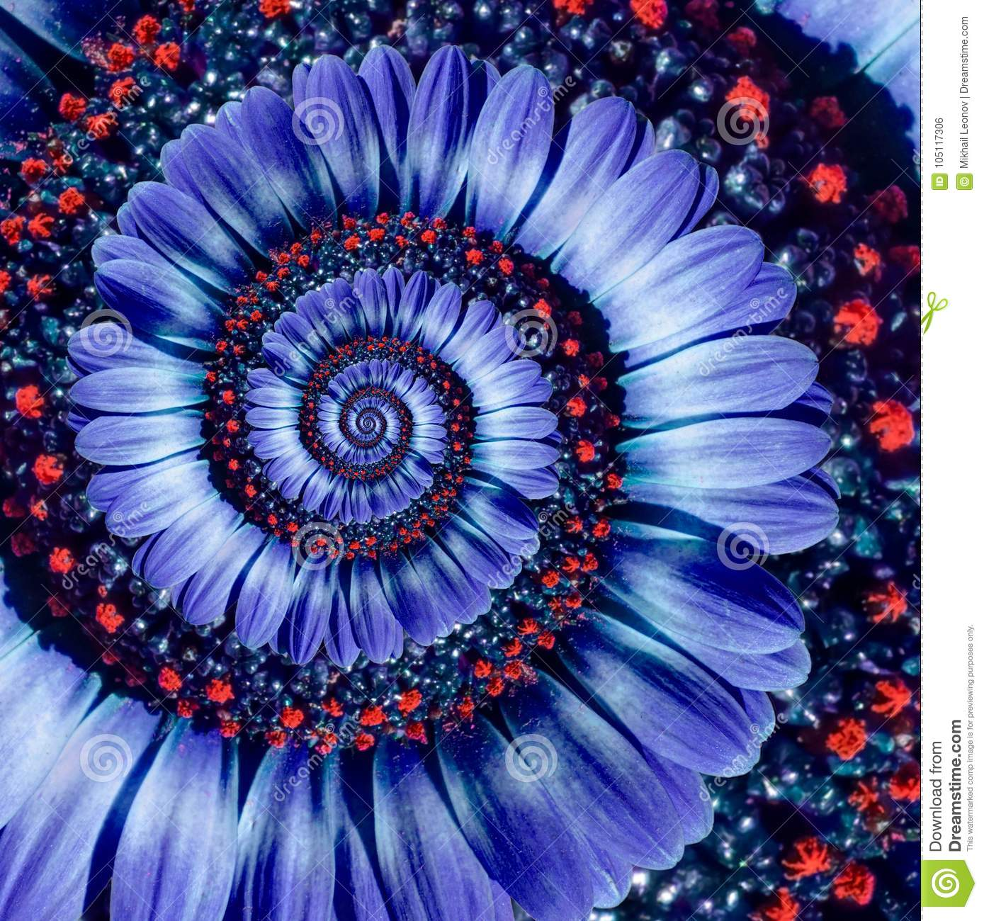 Blue camomile daisy flower spiral abstract fractal effect pattern background. Blue violet navy flower spiral abstract pattern