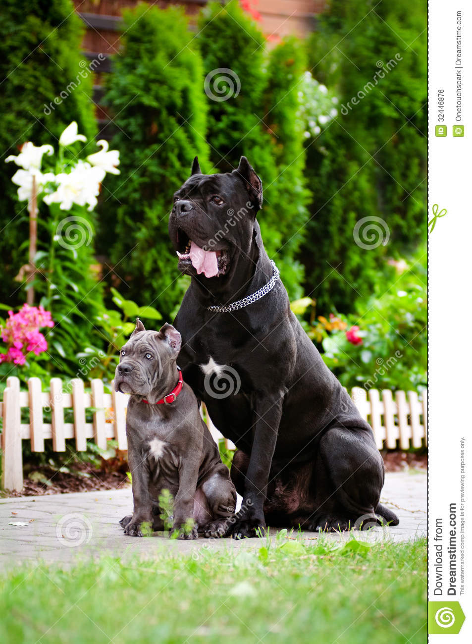 stock photo blue cane corso puppy with a black dog image blue crab clipart graphics blue crab clip art free