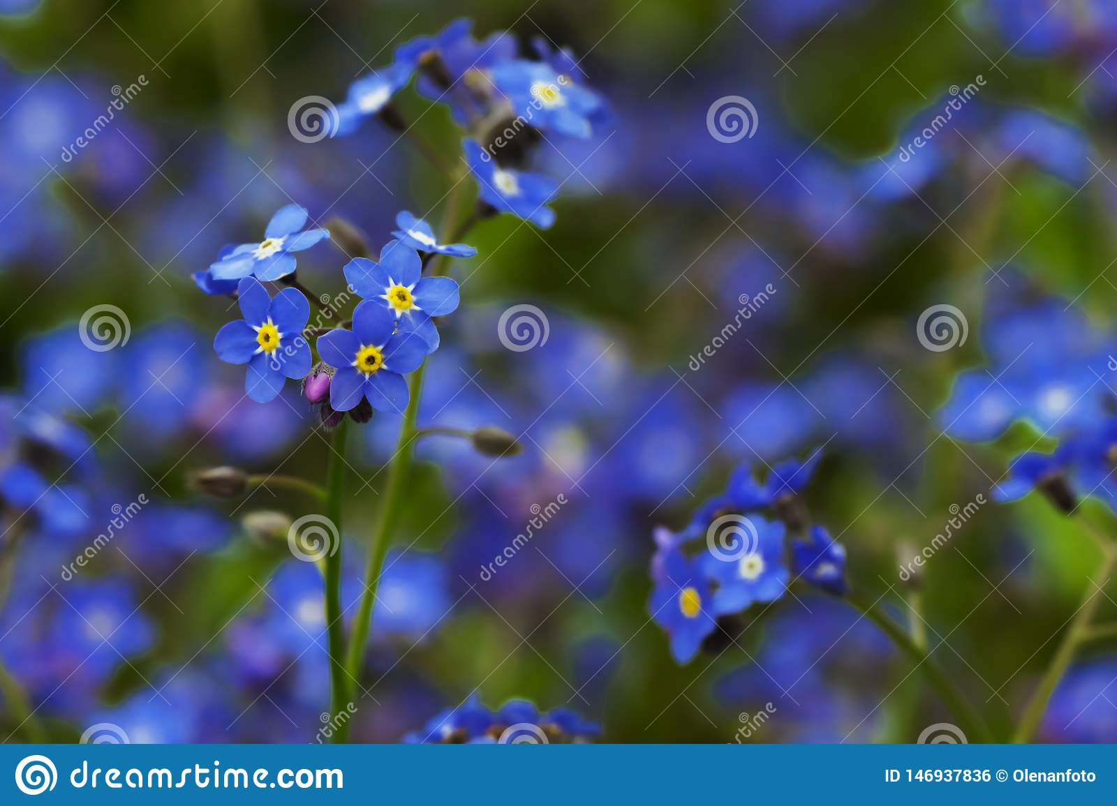 Blue charming small flowers