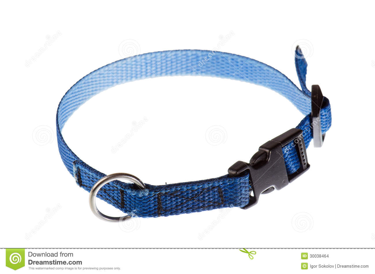 Blue collar for a small dog that