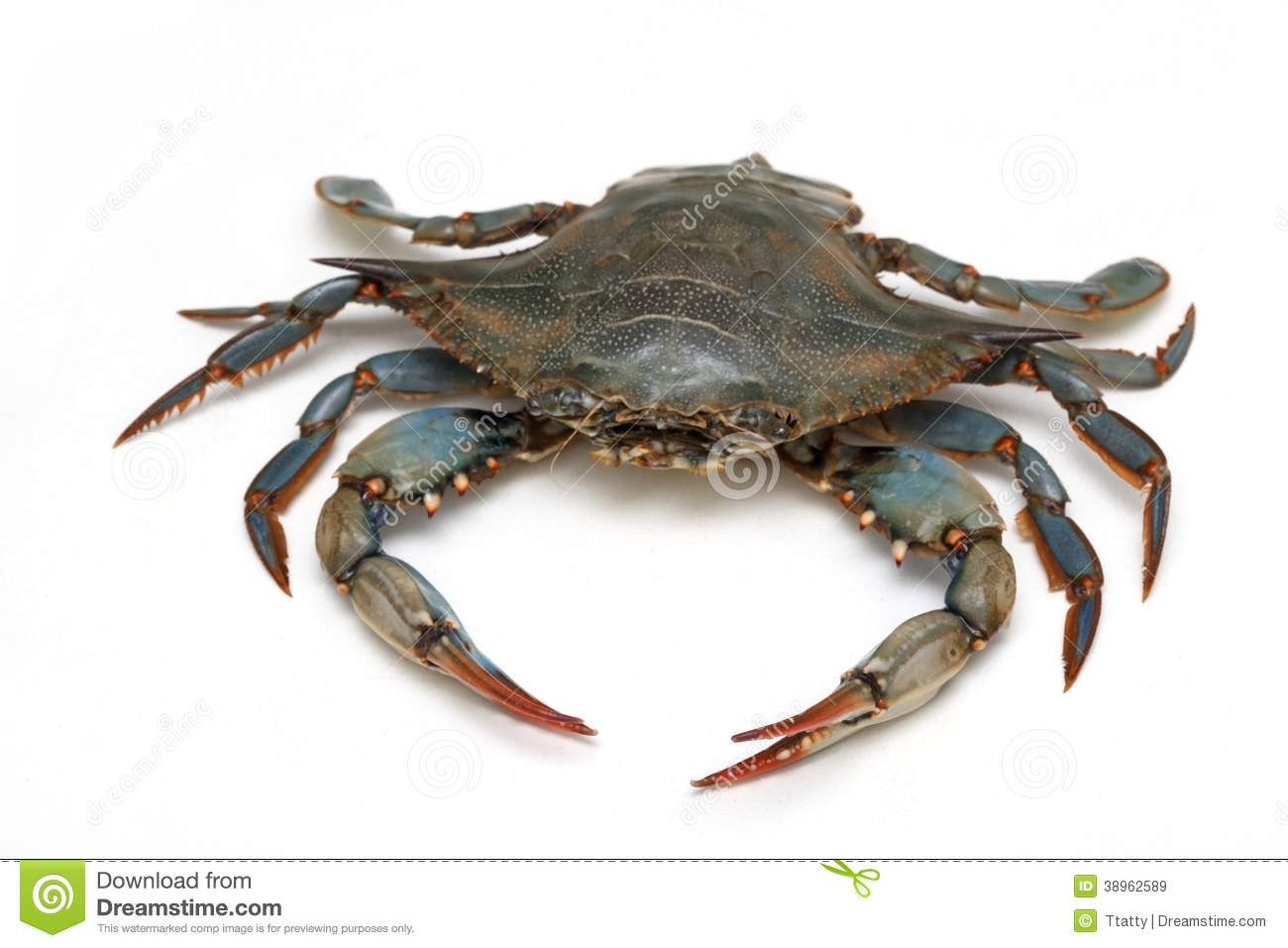 how to kill live blue crabs