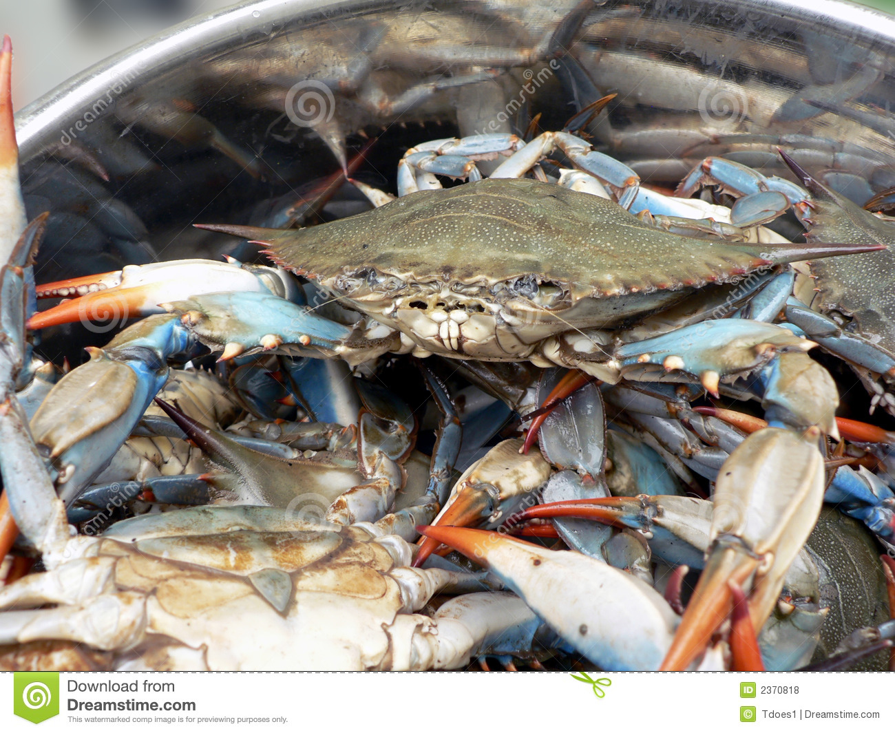 Blue Crabs In Pot 2 Royalty Free Stock Photos Image 2370818