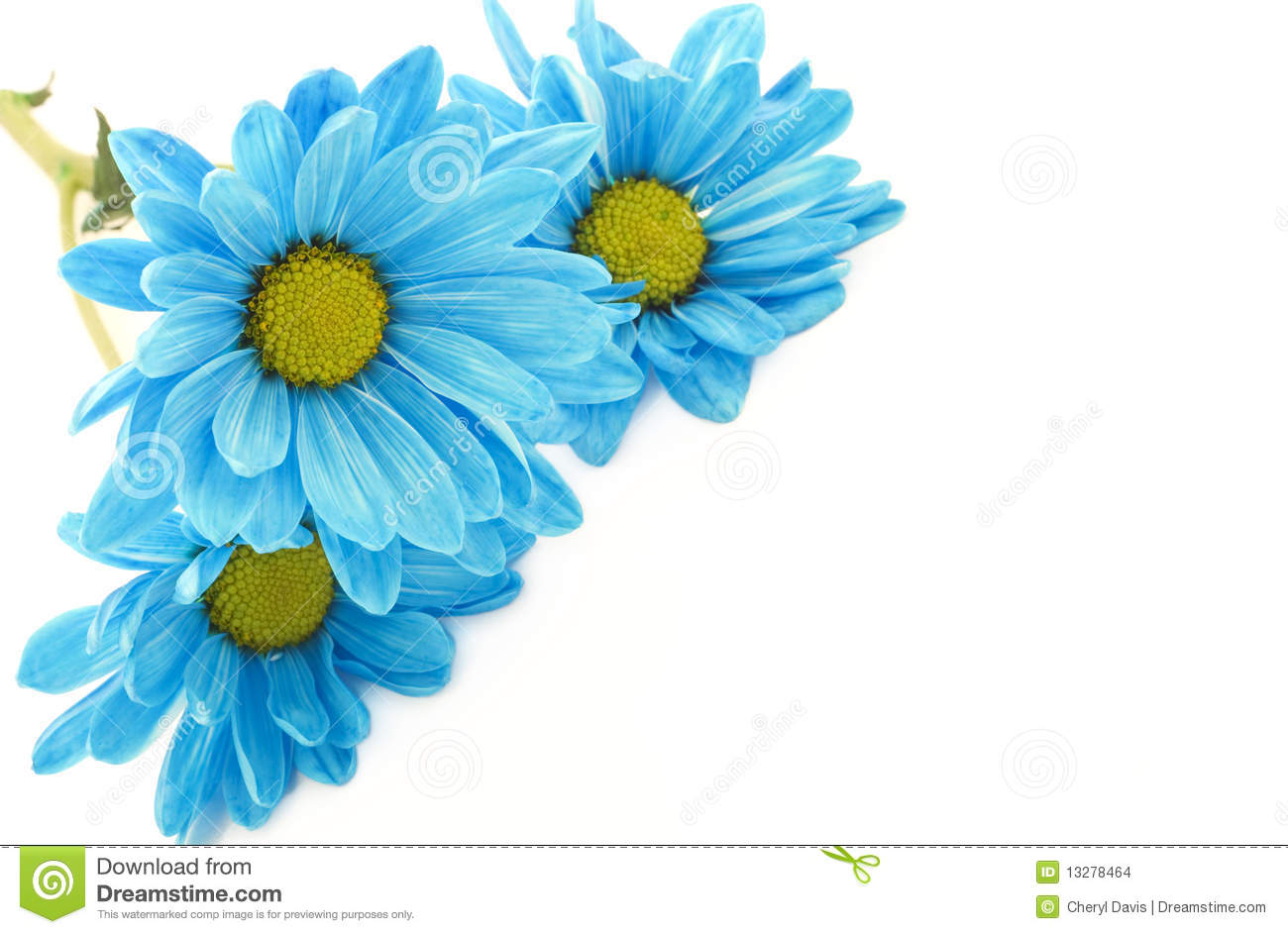 Vibrant blue daisies on a high key horizontal white background, with ... Superhero Flying Vector