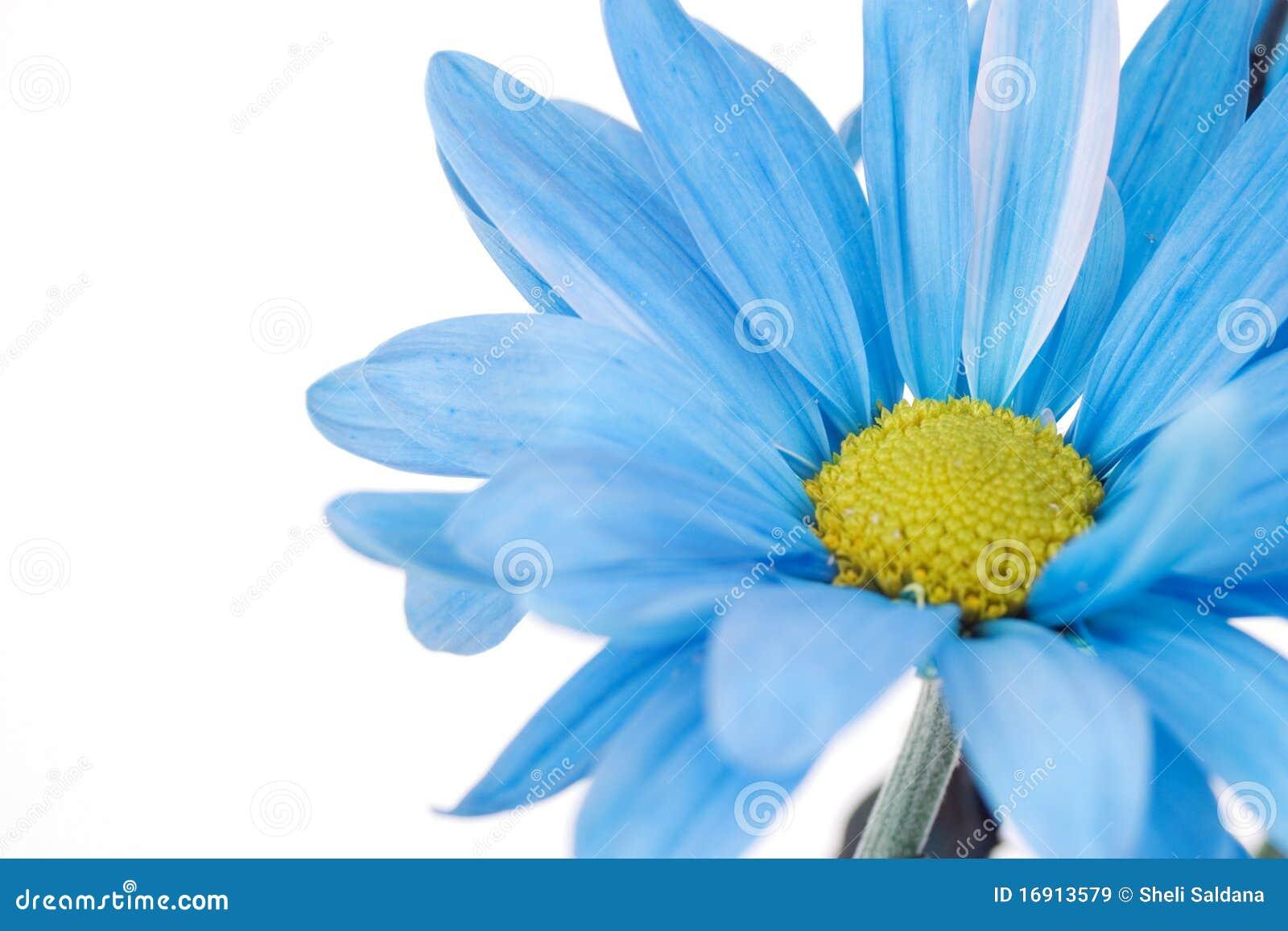 ... daisy flower yellow daisy flower blue daisy flower clip art blue daisy