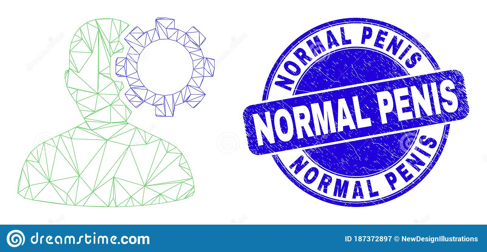 Penis normal Average Penis
