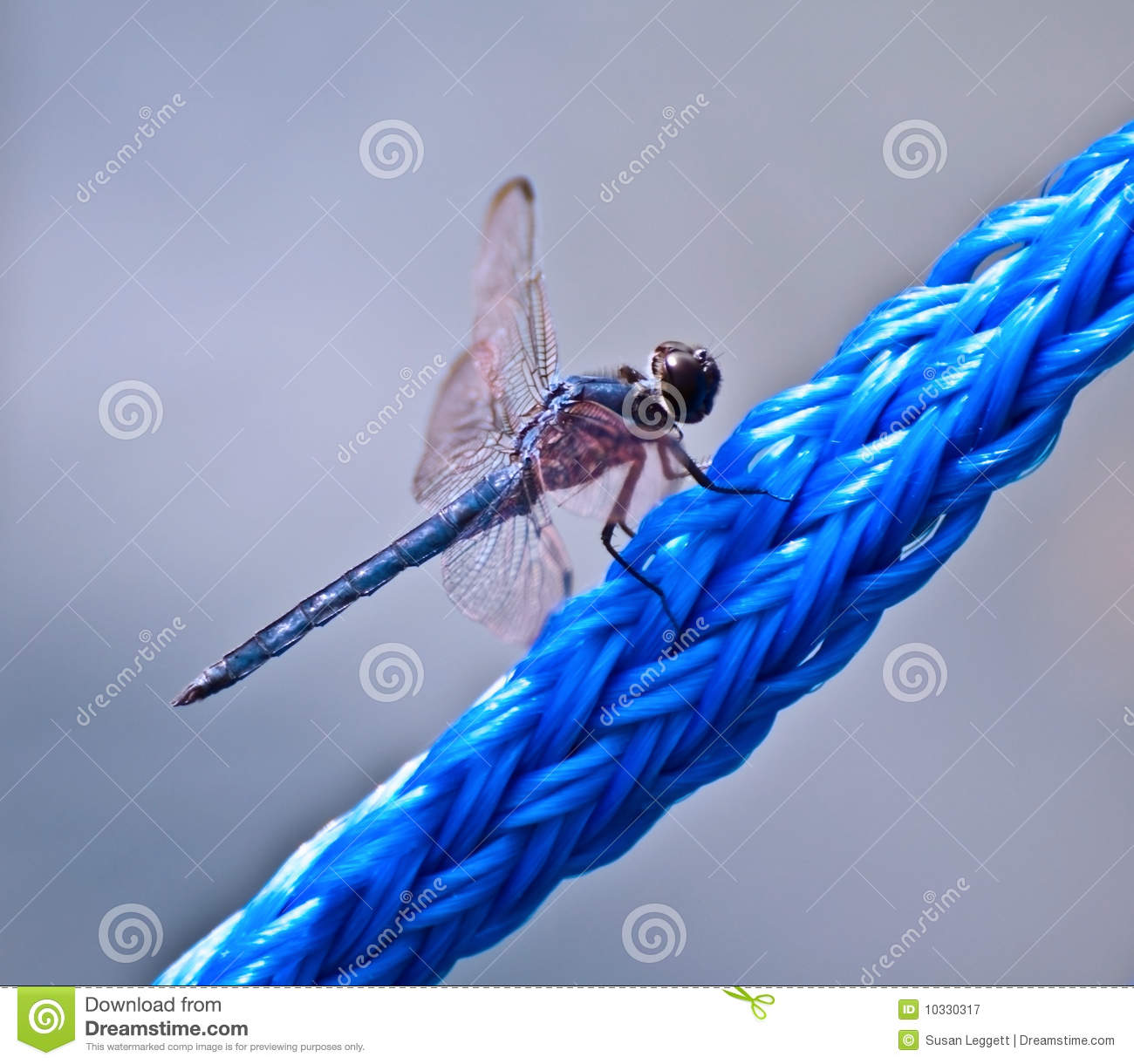 Blue Dragonfly on Blue Rope
