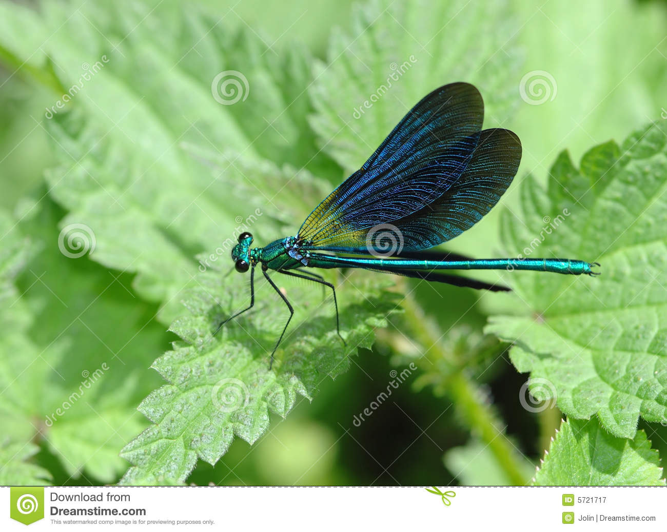 Green dragonfly pictures - photo#27