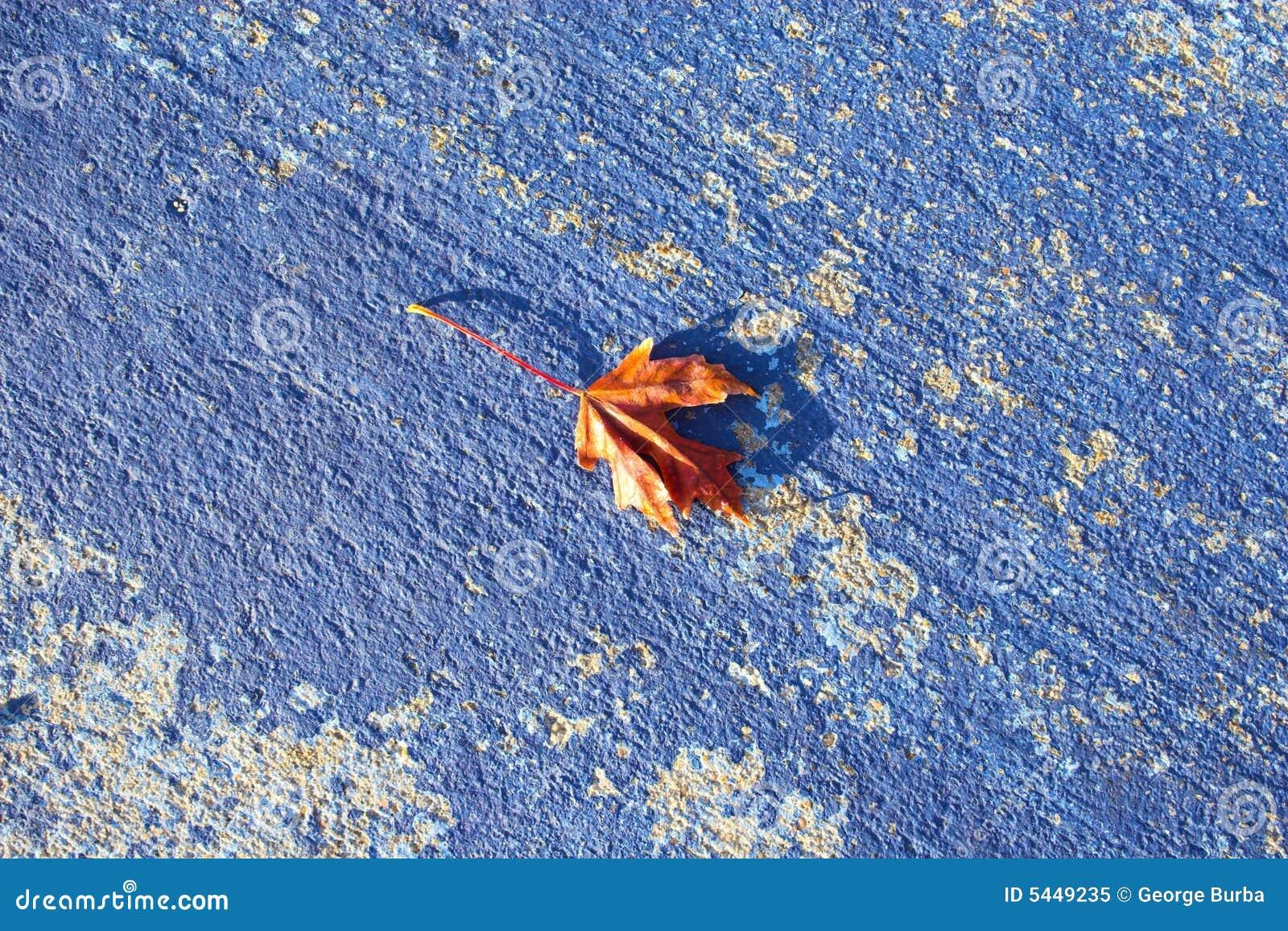 blue fall background stock image image of warm season 5449235