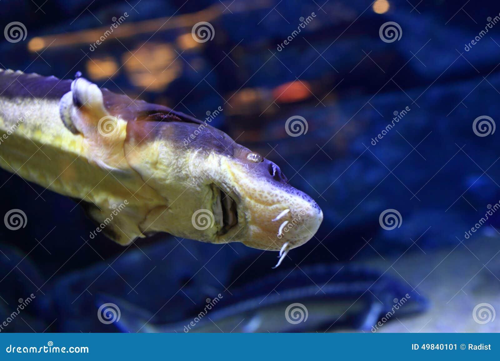 Fish in big aquarium - Blue Fish In The Big Aquarium