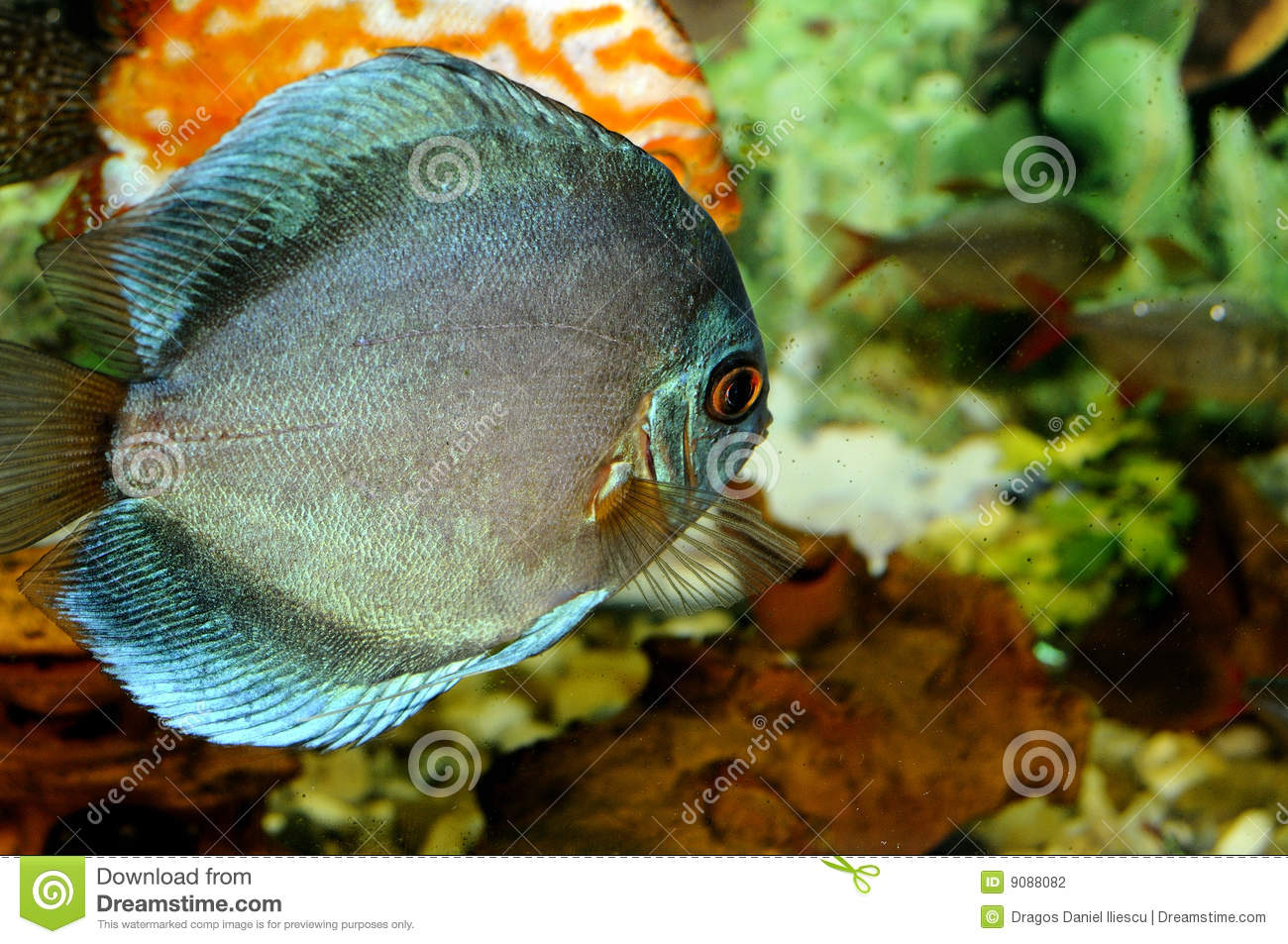 Blue fish swimming stock photo image of diving corals for Dream of fish swimming