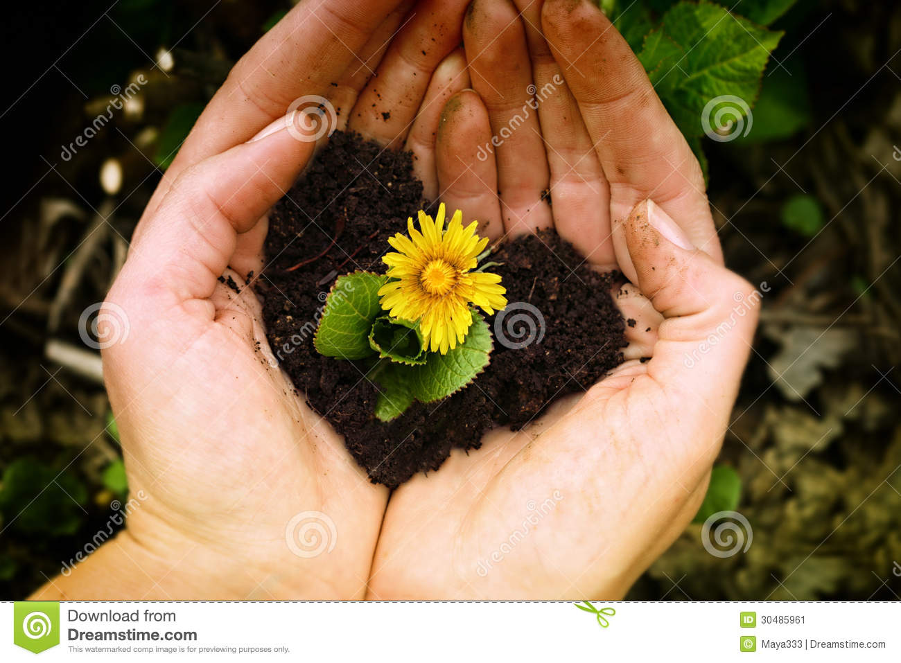 blue flower hands holding small plant yellow soil shaped as heart 30485961