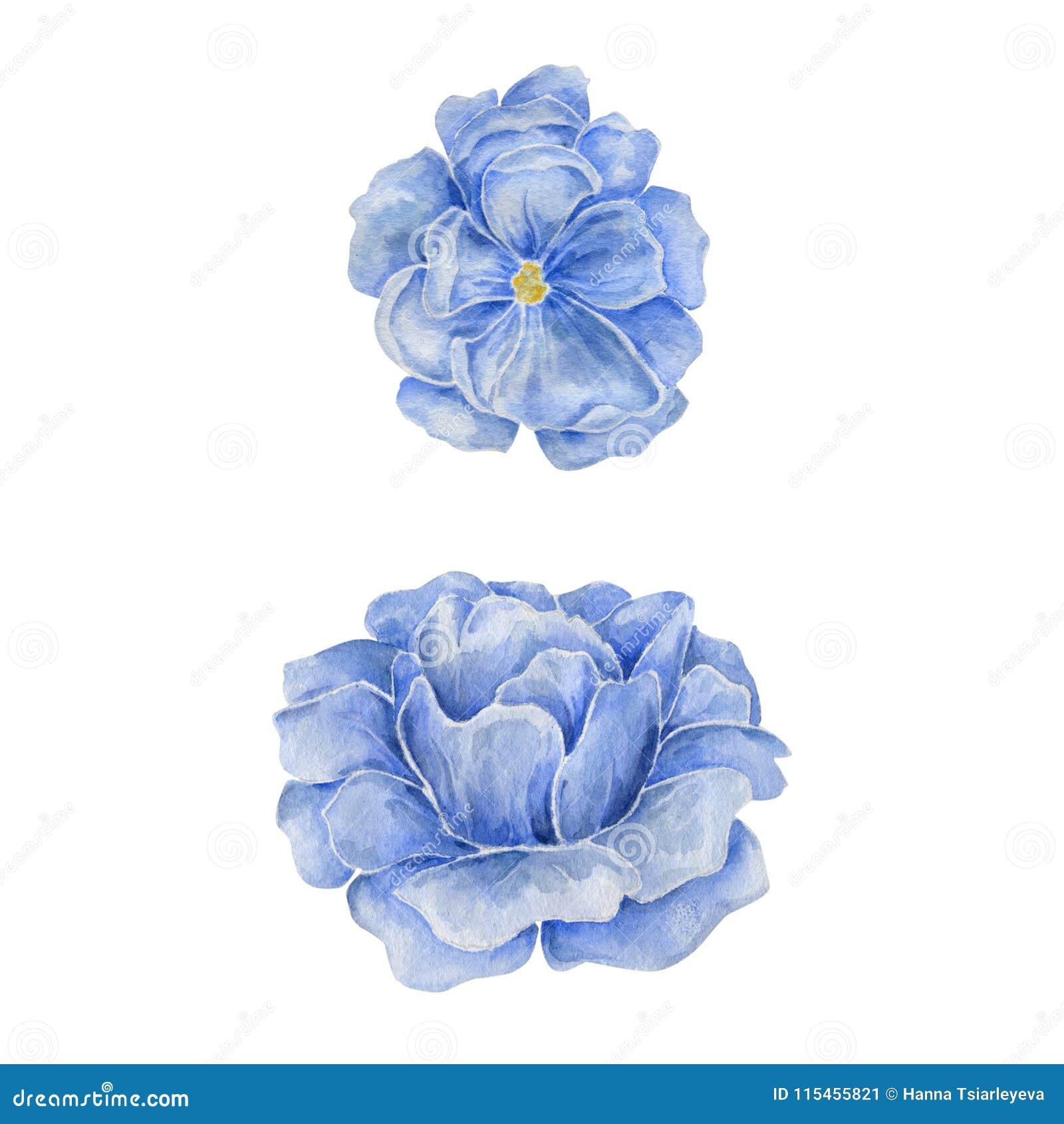 Blue Flower Watercolor Drawing Illustration Geometric Illustration