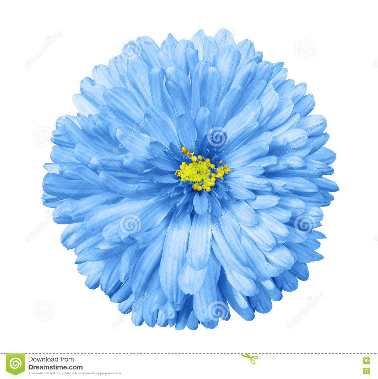 Blue Flower White Isolated Background With Clipping Path Closeup