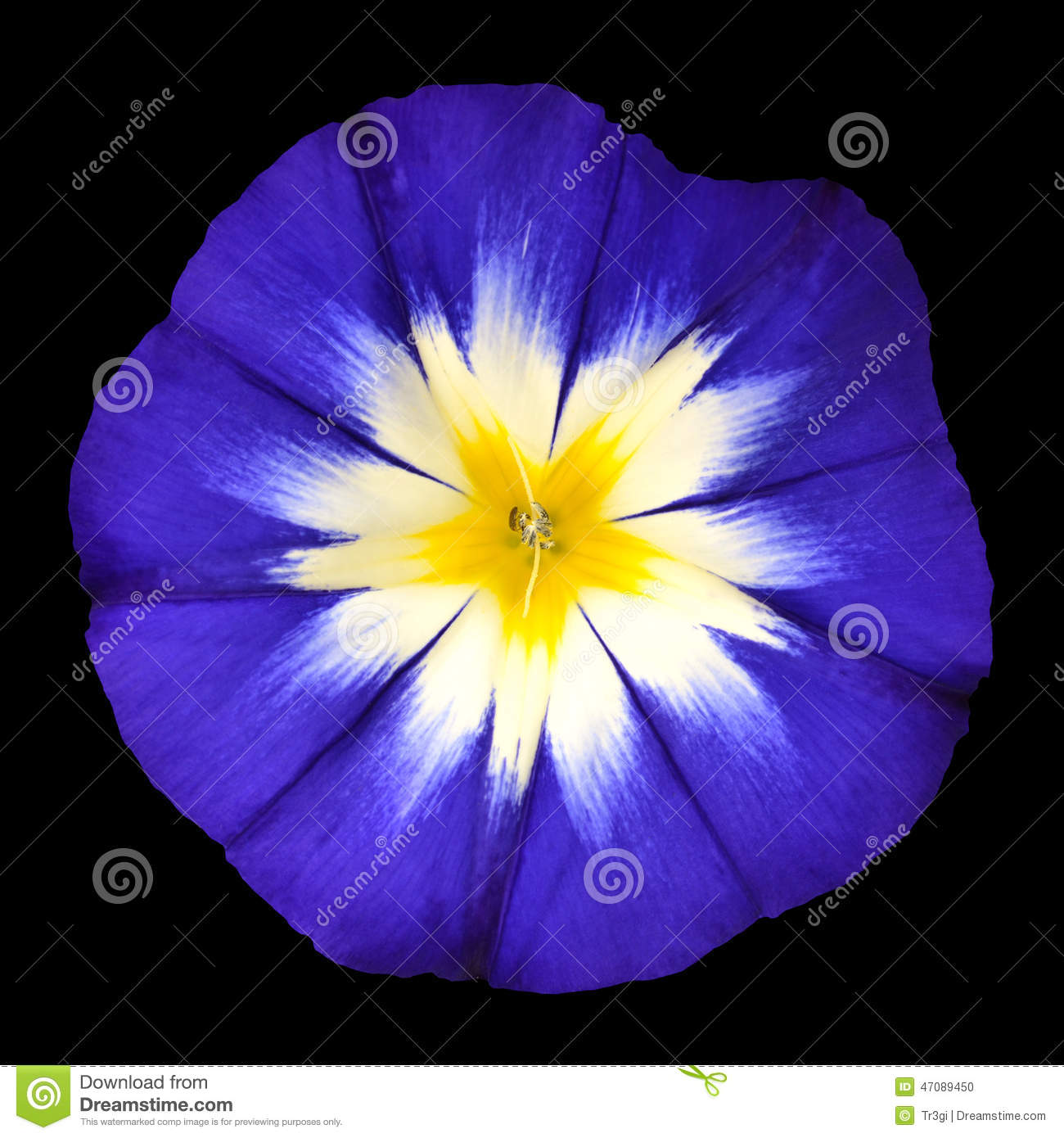 isolated purple flower with yellow center stock photo  image, Beautiful flower