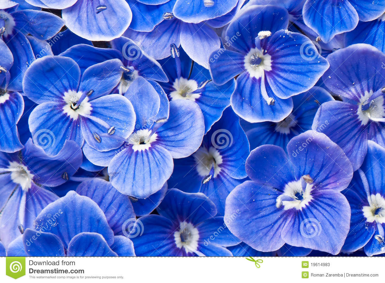 blue flowers stock image image of beautiful detailed 19614983