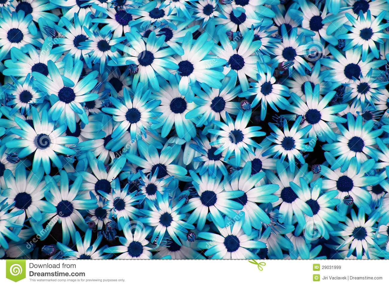 Eletragesi Blue And White Flowers Tumblr Images