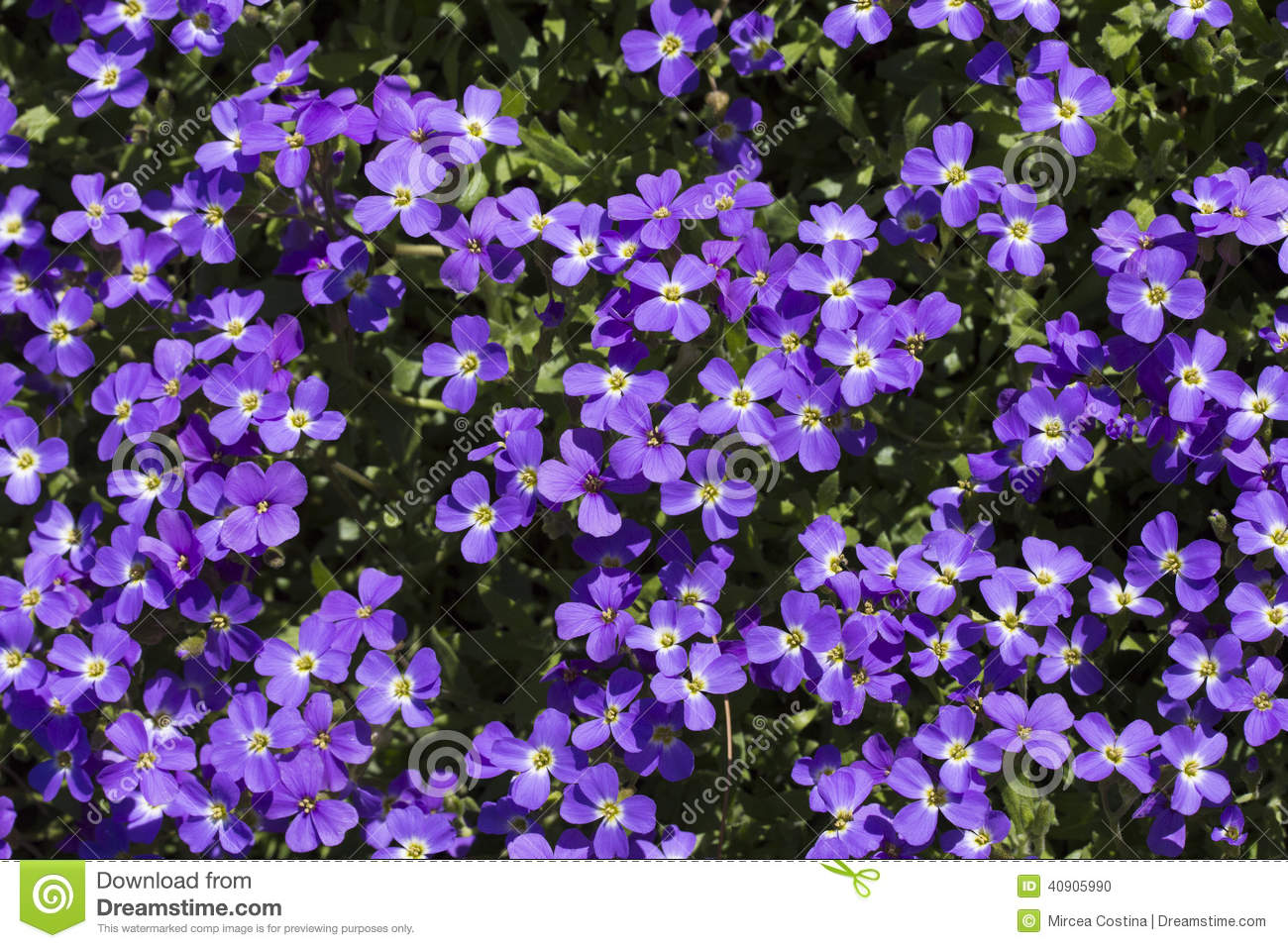 Types Of Naturally Blue Flowers