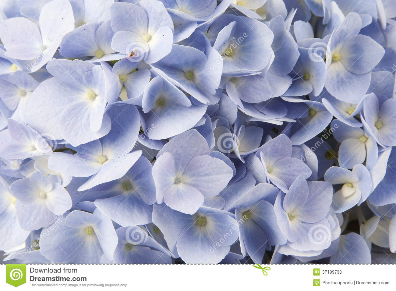 Blue Flowers Stock Image Image Of Nobody Floral Leaf 37199733