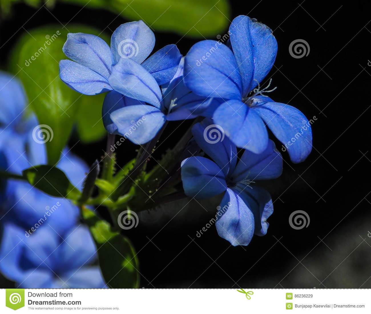 Blue flowers stock image image of natural connection 86236229 blue flowers izmirmasajfo