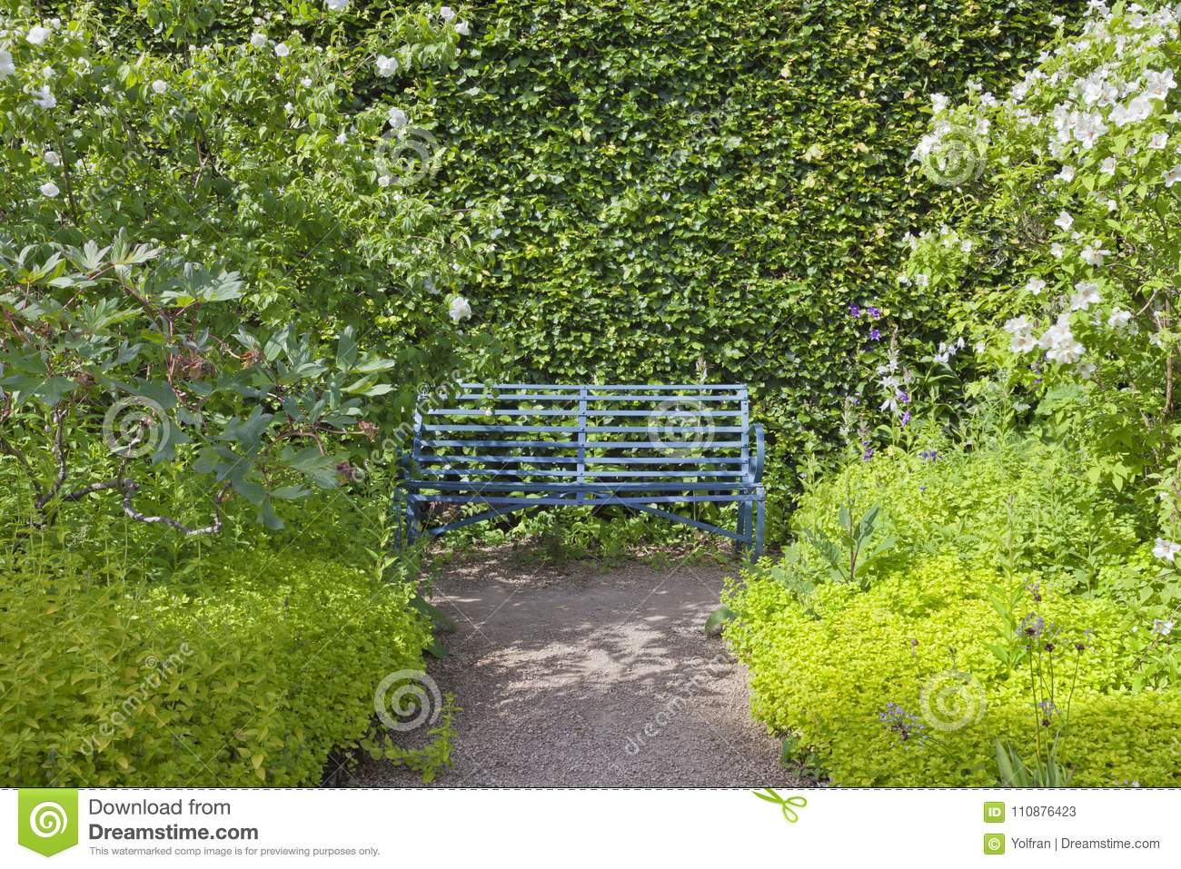 Picture of: Blue Garden Bench By A Leafy Trimmed Hedge Stock Image Image Of Gardening Green 110876423