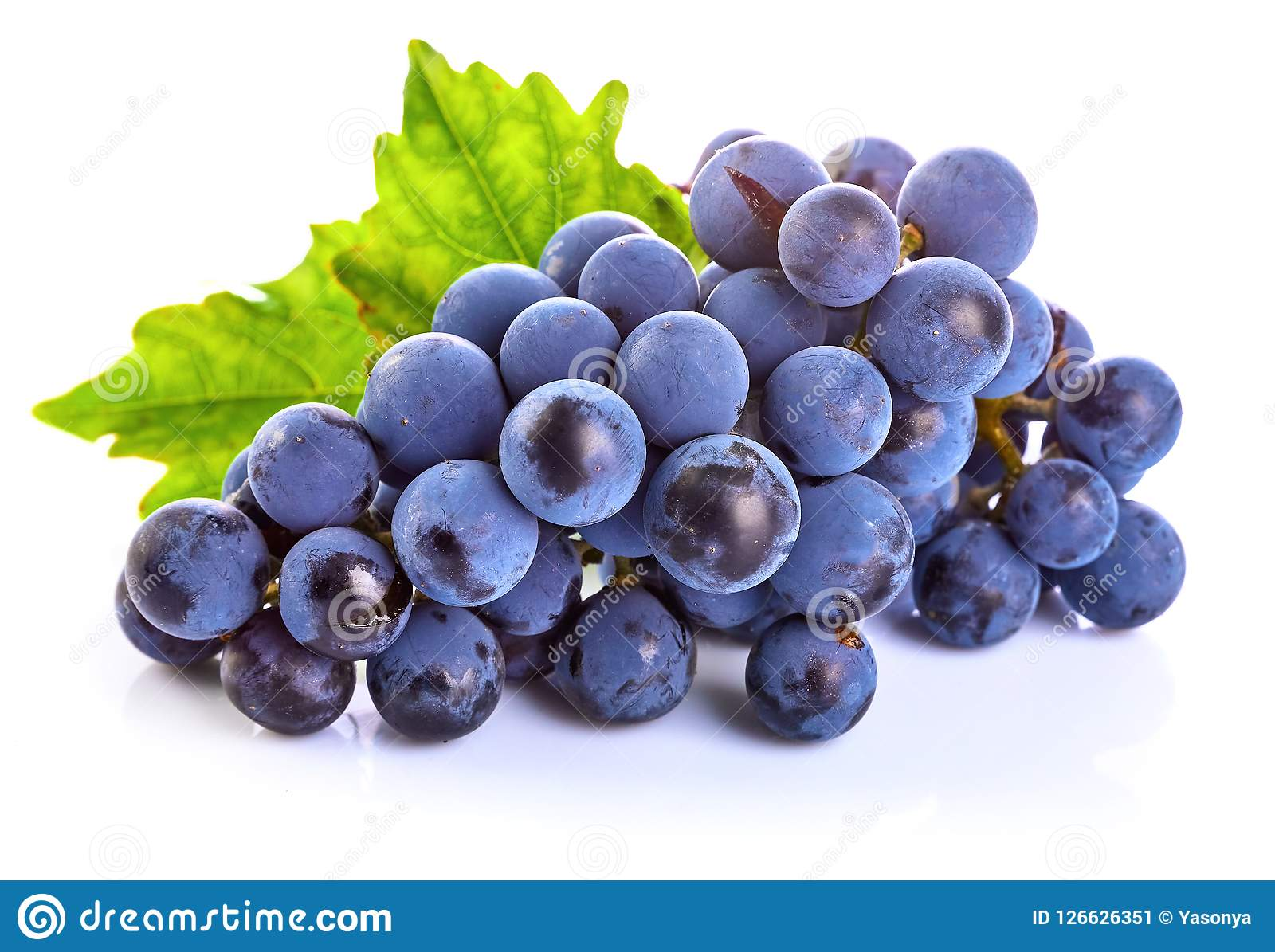Blue grapes with green leaf healthy eating.