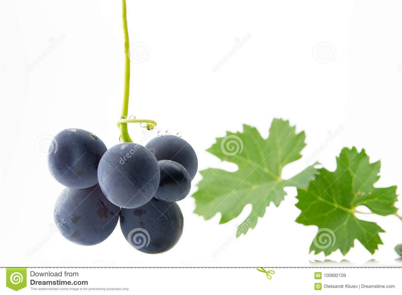 Blue grapes with green leaves