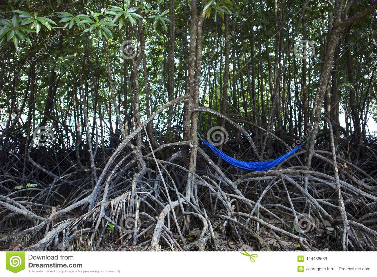 Blue Hammock Hanging On Tree Stock Image Image Of Leaf Vacation