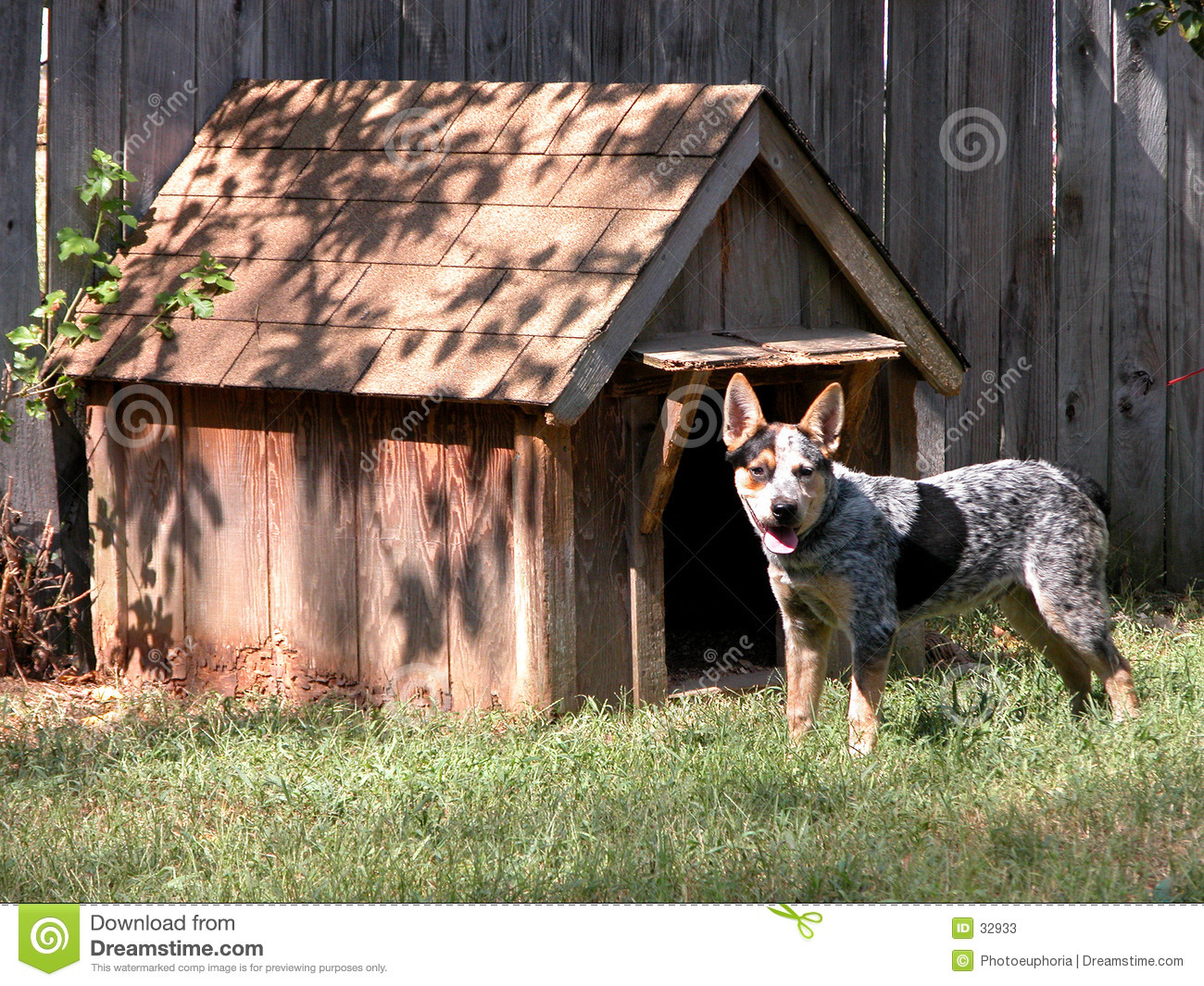 Blue Heeler Outside His Dog House Stock Image Image Of