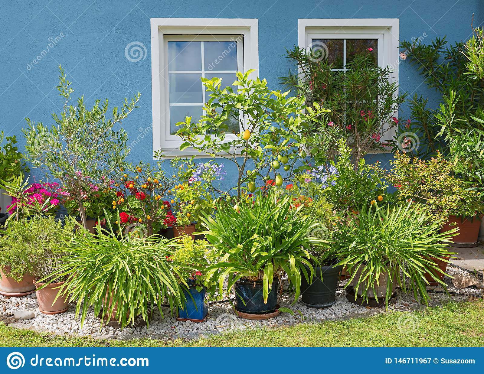 Blue House Front With Two White Windows And Mediterranean Plants