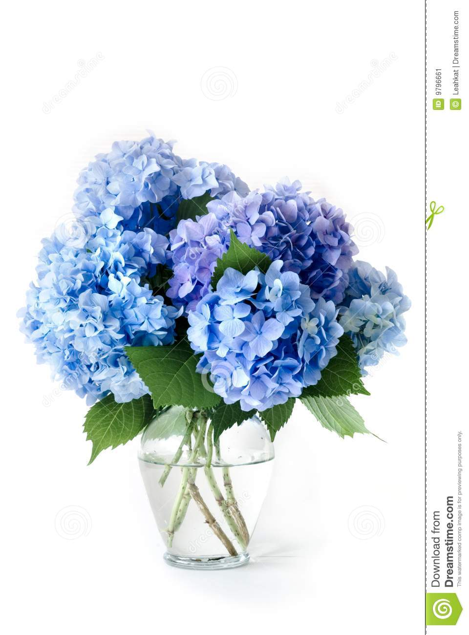 Stock Image Blue Hydrangeas Image9796661 besides Input Creative Studio Designs A Photography Studio In New York 9683 also Photo Stock Vieille Maison De C agne En Bois Image18084480 additionally Stock Photo Cartoon Dragon Vector Illustration Image31019320 furthermore Eelpieboatyard co. on small nature house