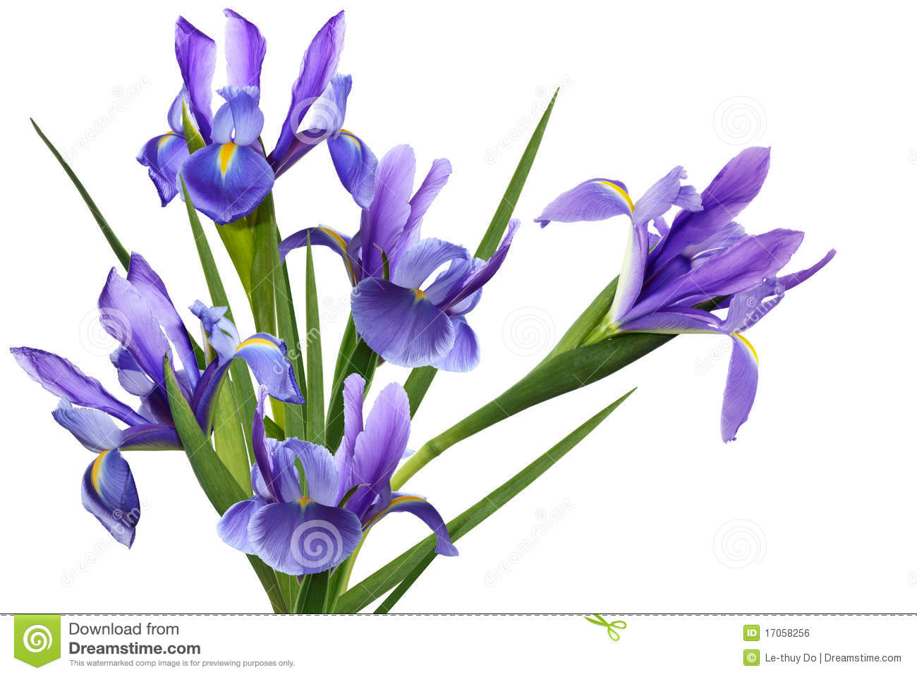Blue Iris Flower Stock Photo Image Of Pollen Details 17058256