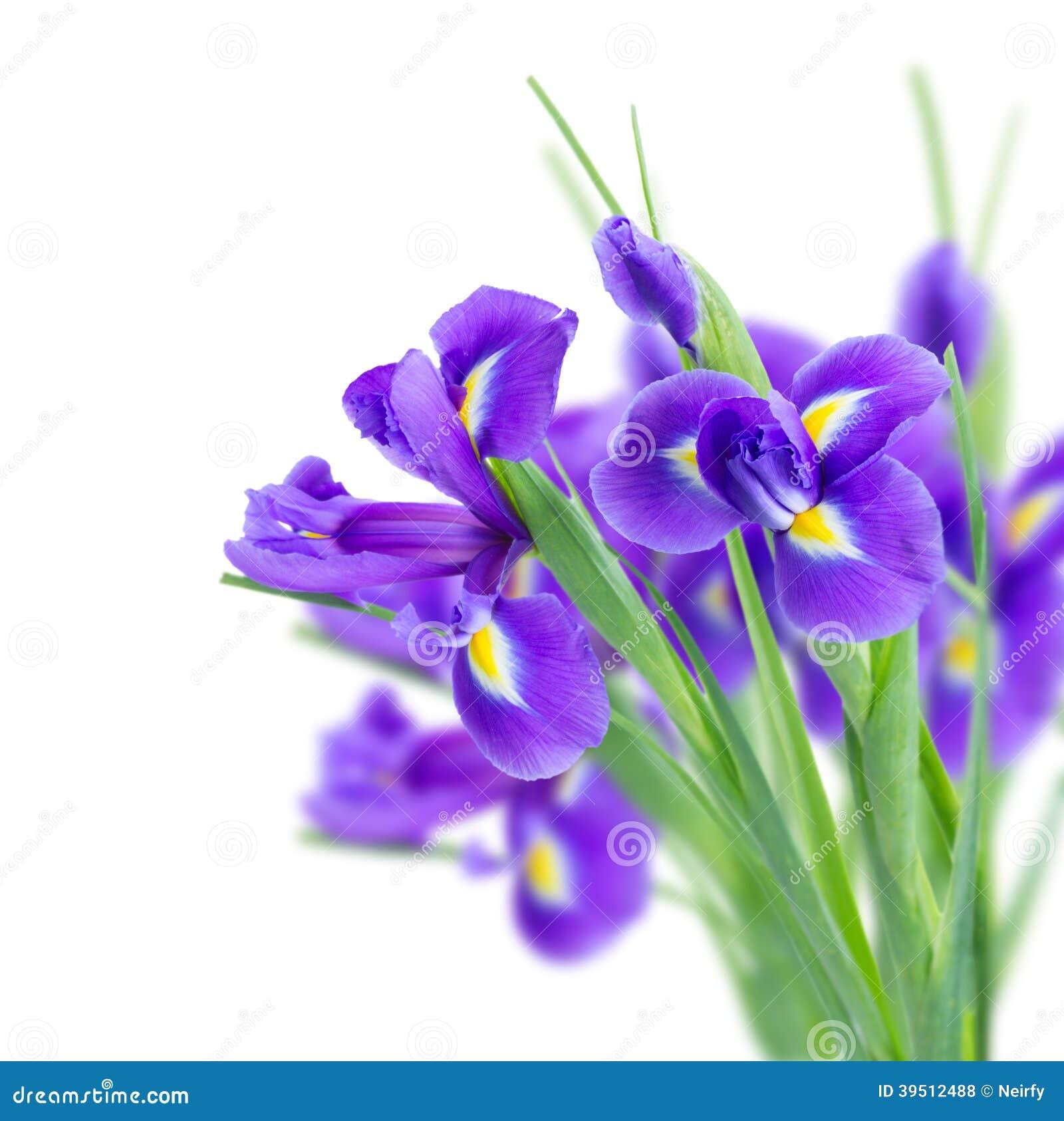 Blue irise flowers