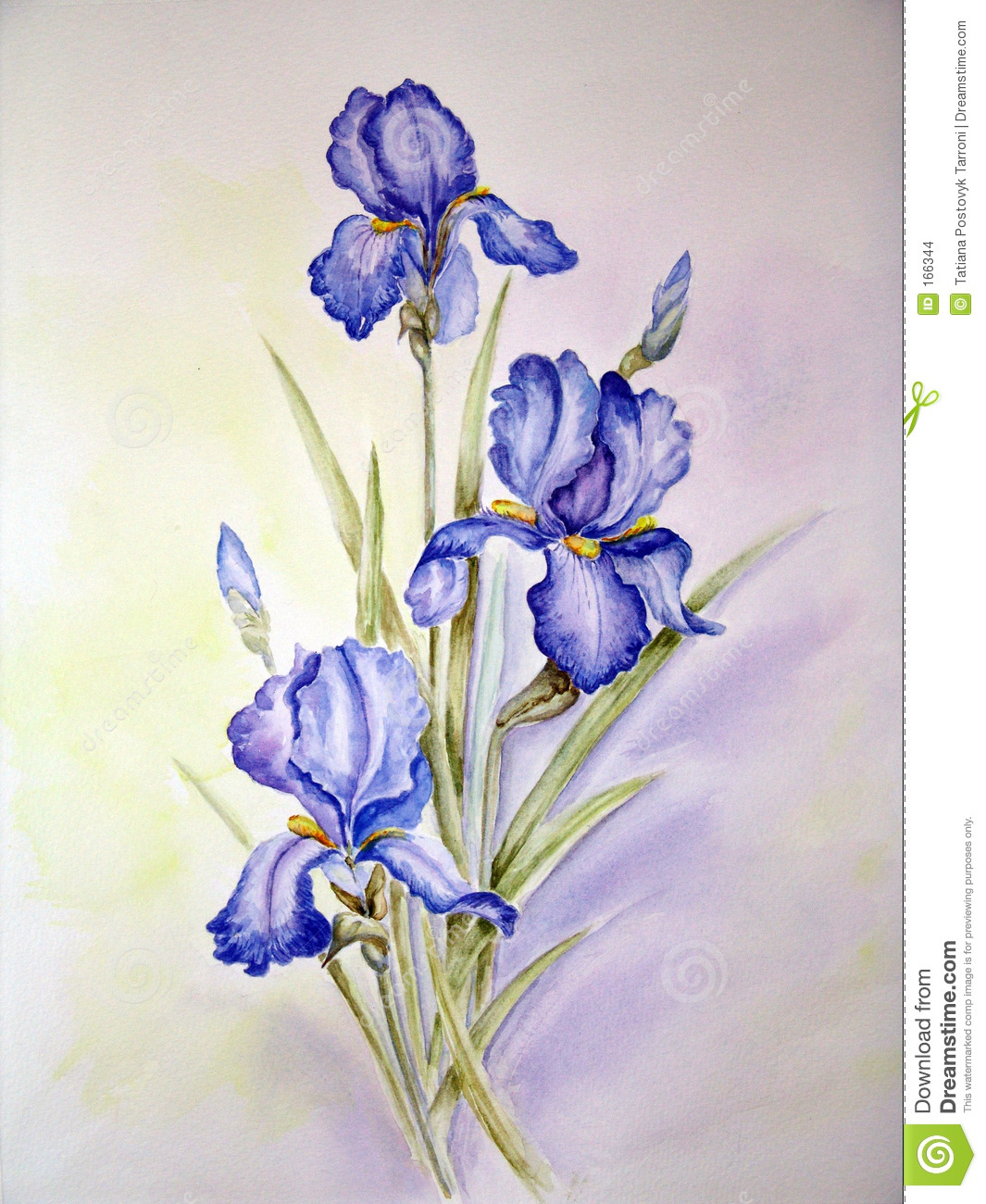 blue irises painting stock illustration illustration of watercolour 166344. Black Bedroom Furniture Sets. Home Design Ideas
