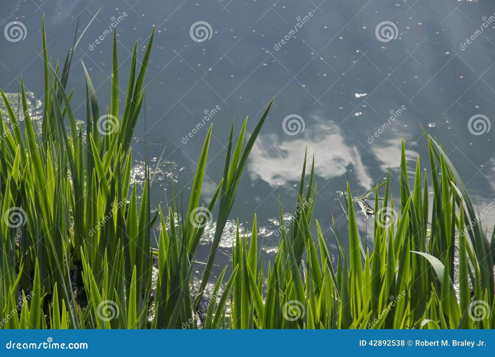 Blue Lake water green grass