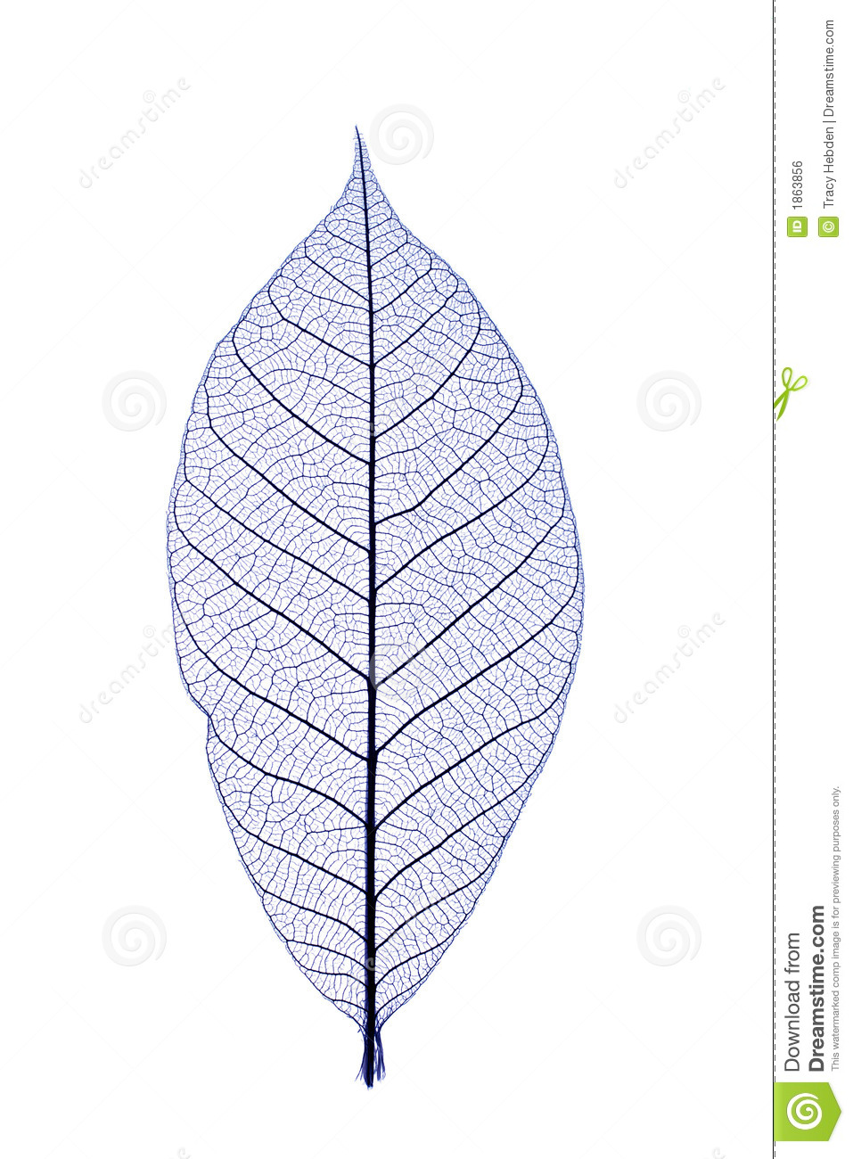 Blue leaf stock photo. Image of nature, natural, beauty ...