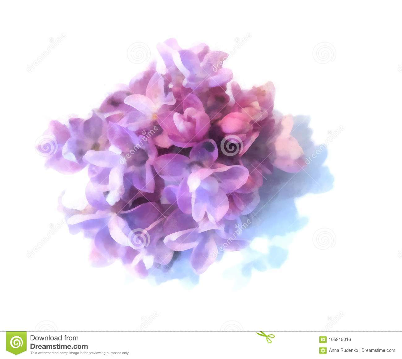 Blue Lilac Oil Draw Perspective Paint Fresh Delicate Flowers An Stock Illustration Illustration Of Green Freesias 105815016