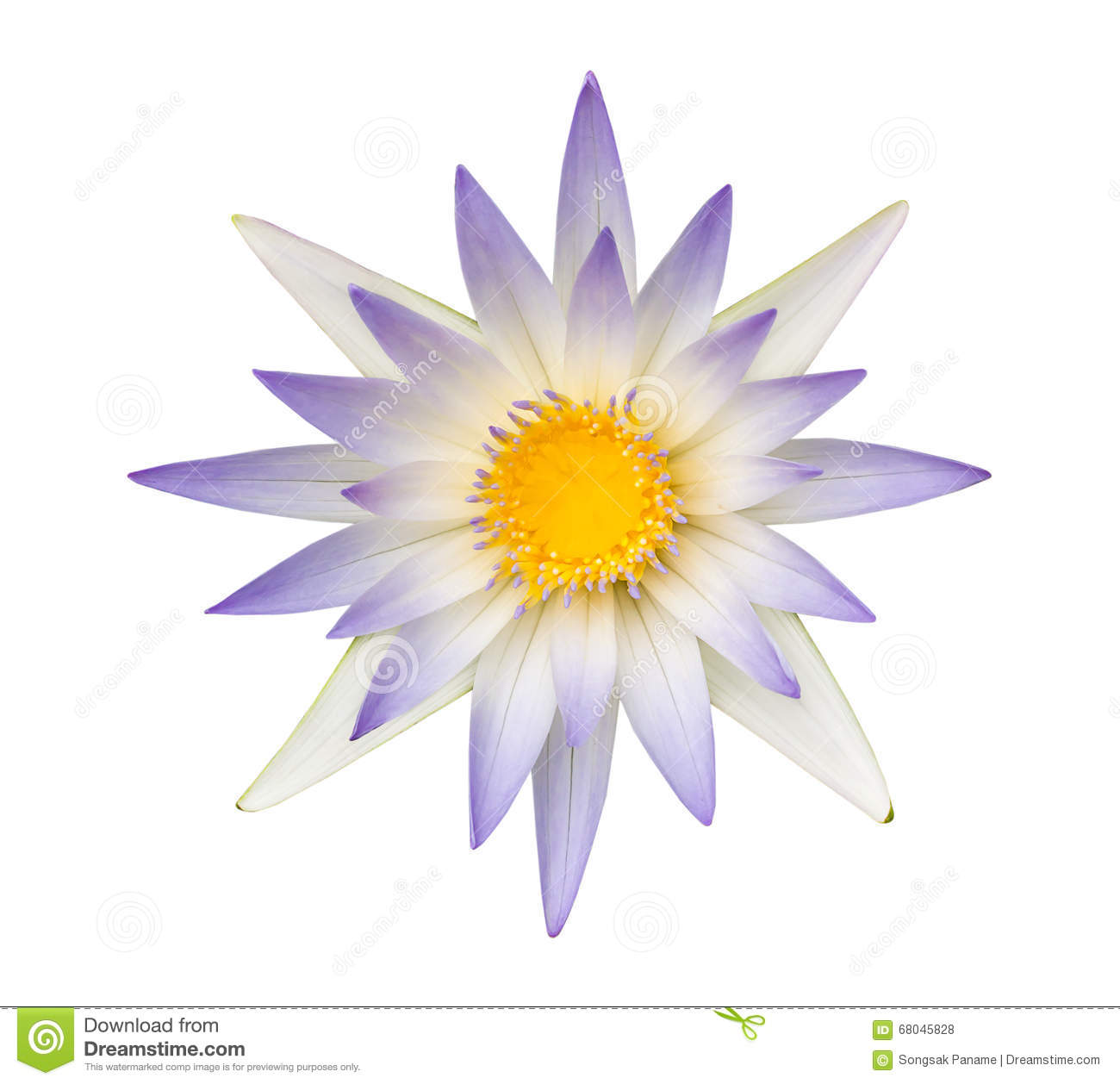 Blue lotus blue water lily isolated stock photos 506 images izmirmasajfo