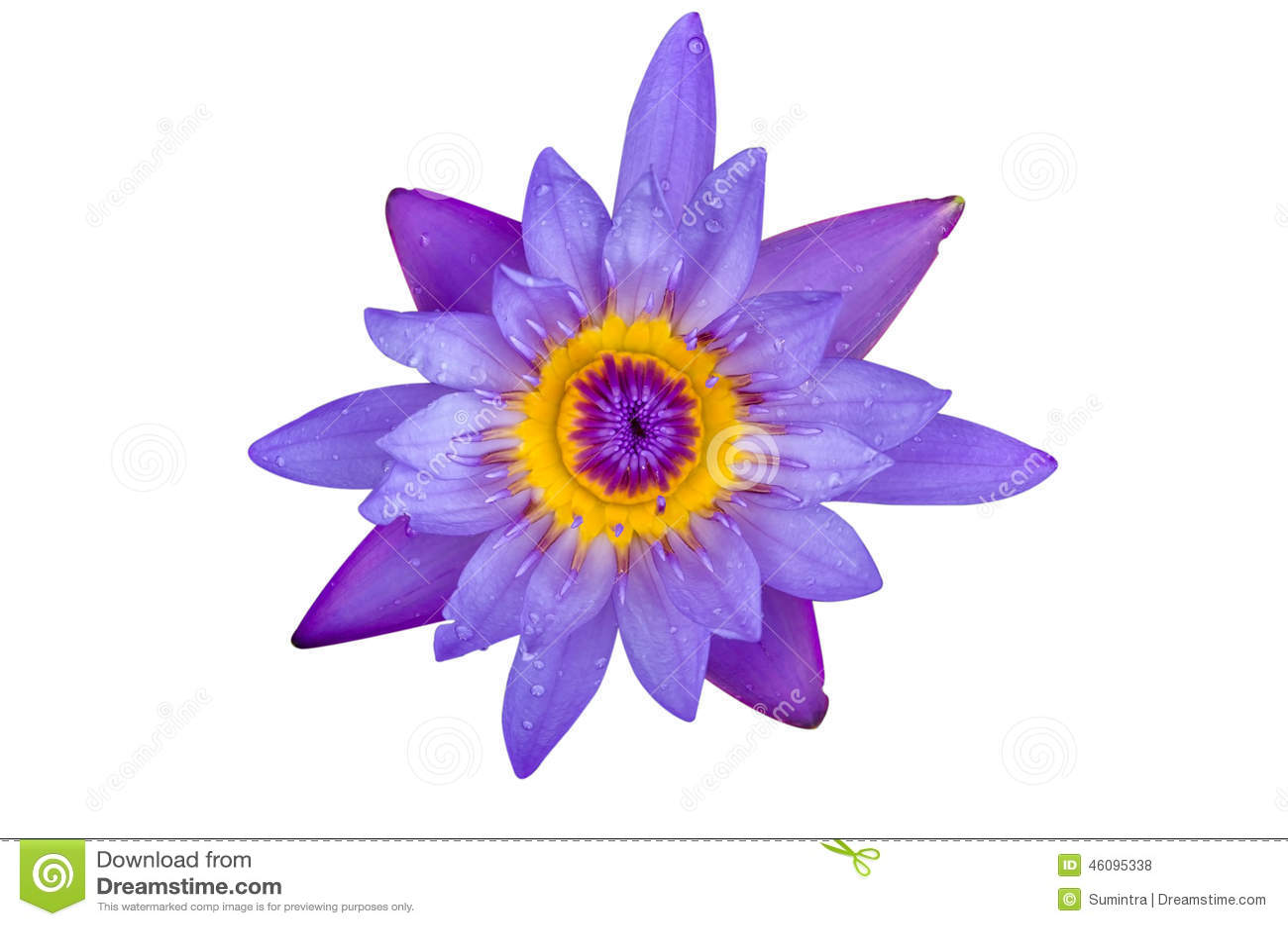 Blue lotus flower white background blue lotus flower and white background royaltyfree stock izmirmasajfo
