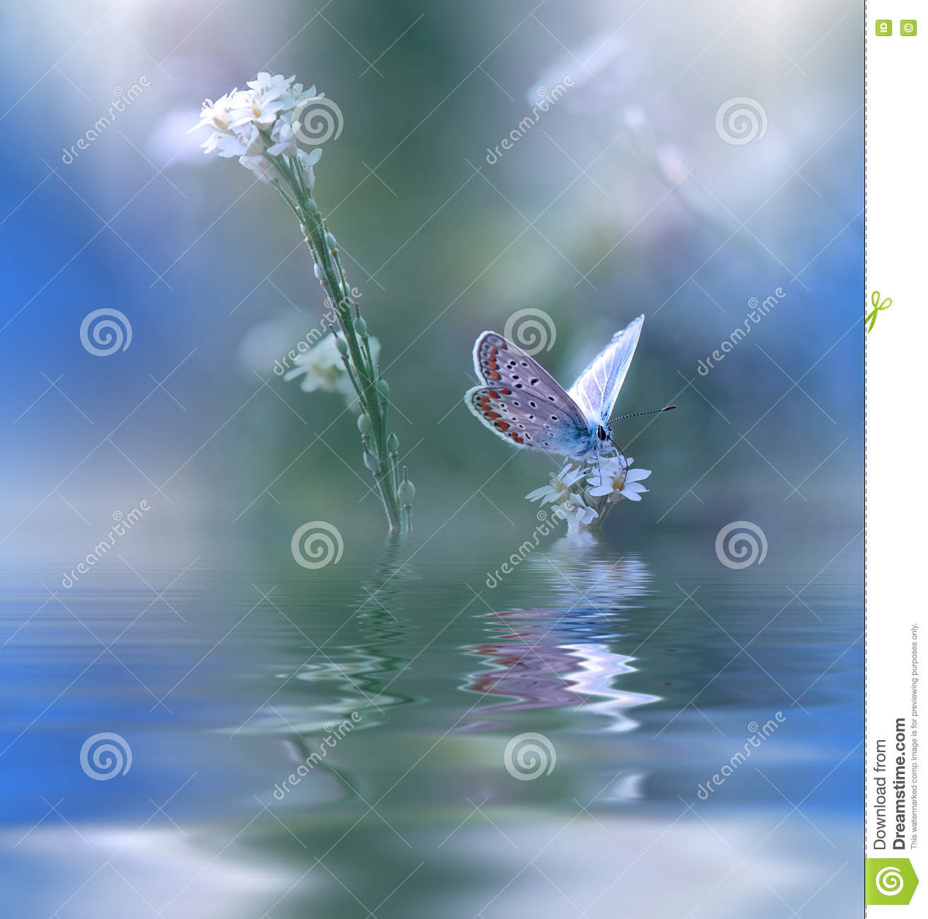 Blue Magic Butterfly Over Water And Wildflowers Amazing Beautiful Nature Background Colorful Blue Wallpaper Colors Art Spa Flowers Stock Image Image Of Cyan Morph 82283139,Tapered Rectangular Lamp Shades Uk