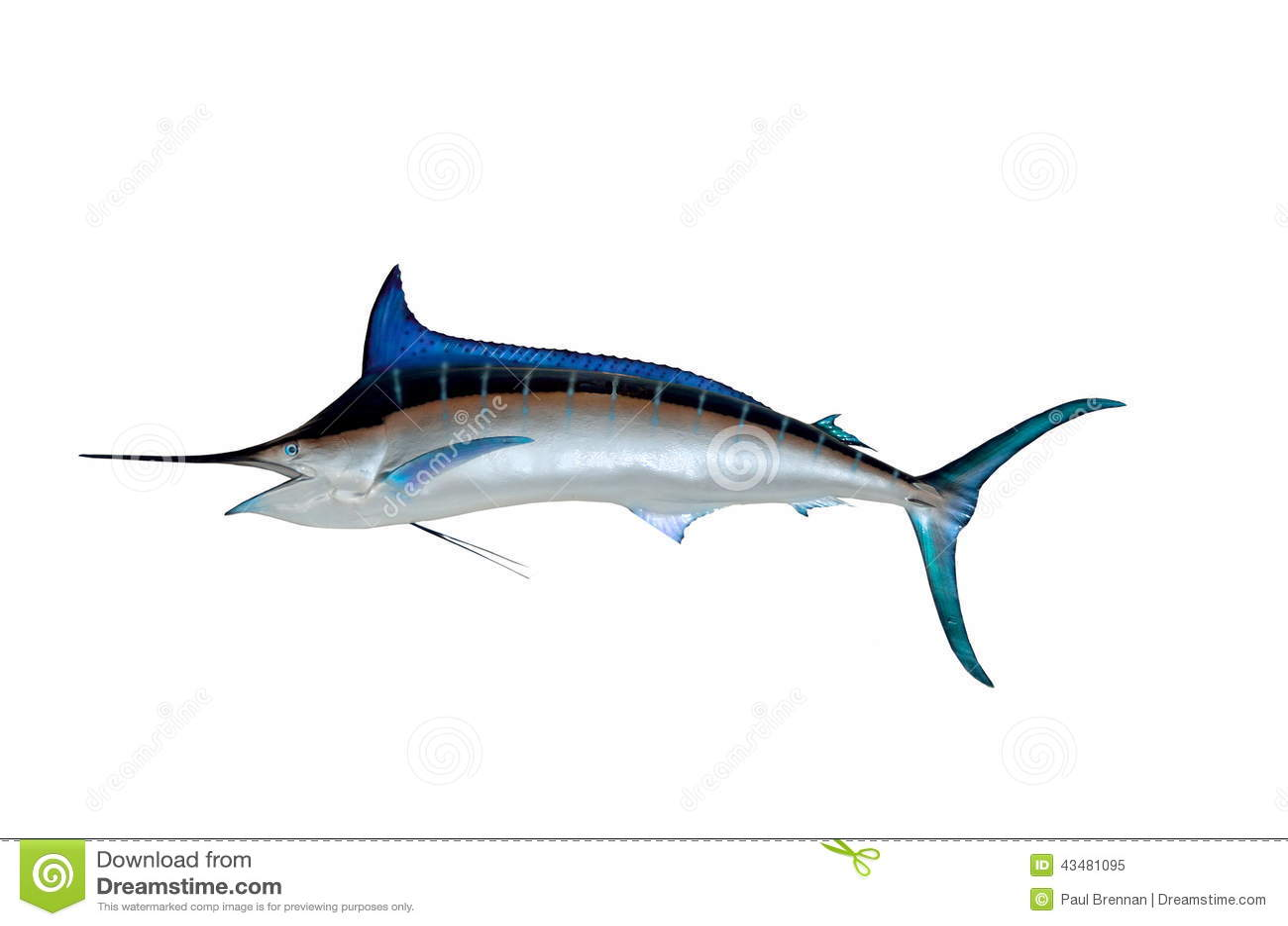 Blue Marlin Wall Mount Stock Illustration Image 43481095