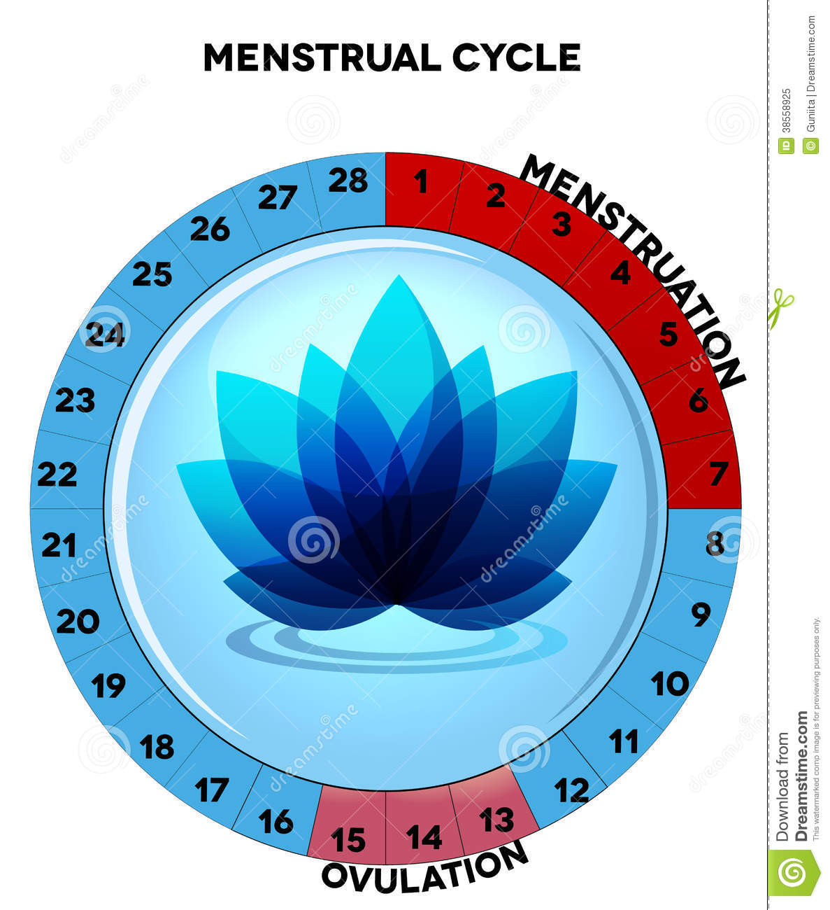 Blue menstrual cycle chart with flower stock vector illustration