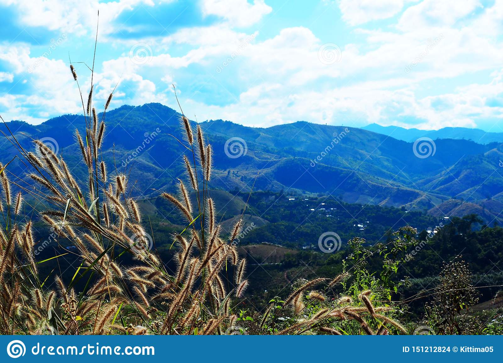 Top grass on the mountain Beautiful northern landscapes in nature